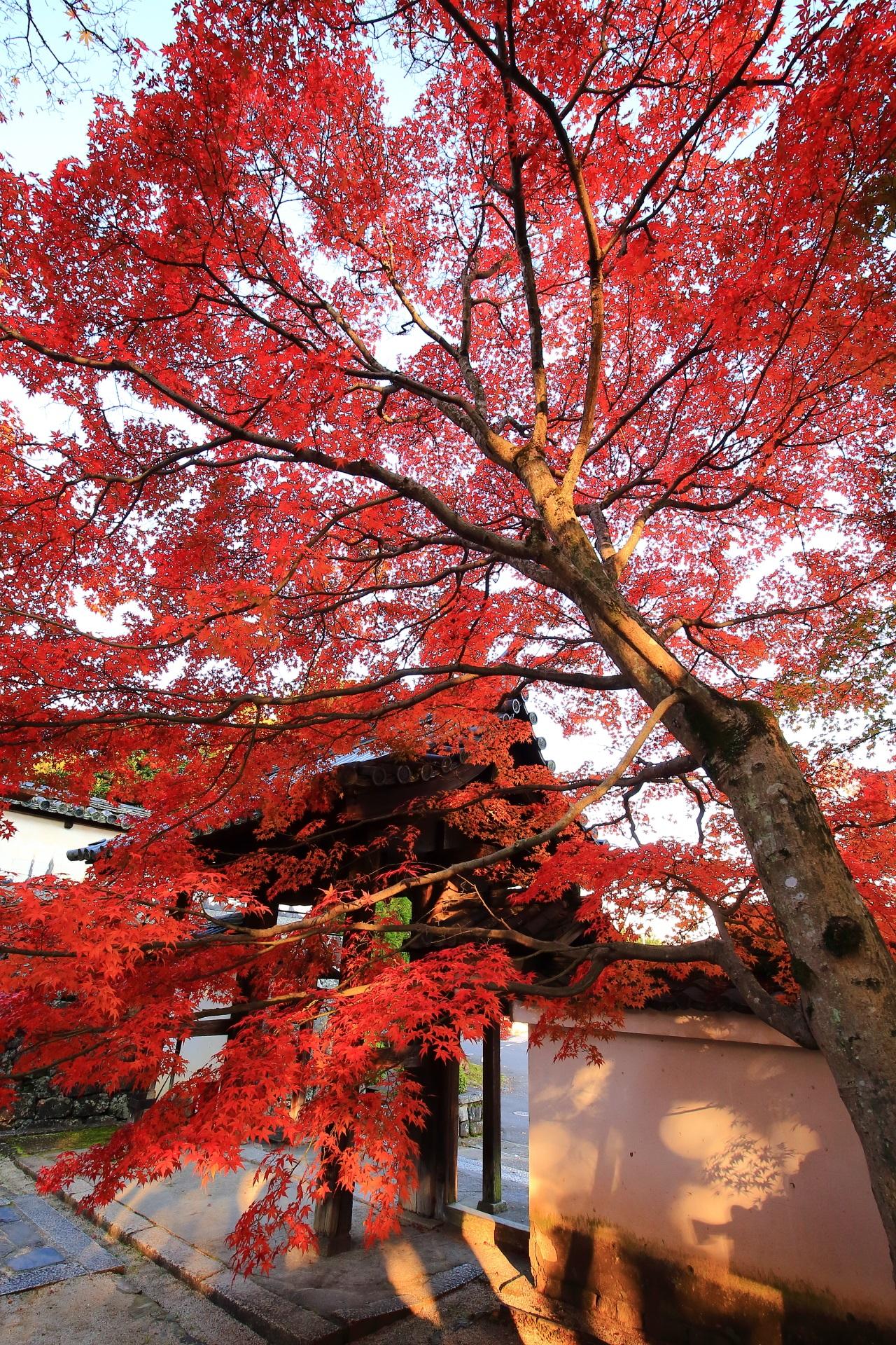 総門前の鮮やかな紅葉
