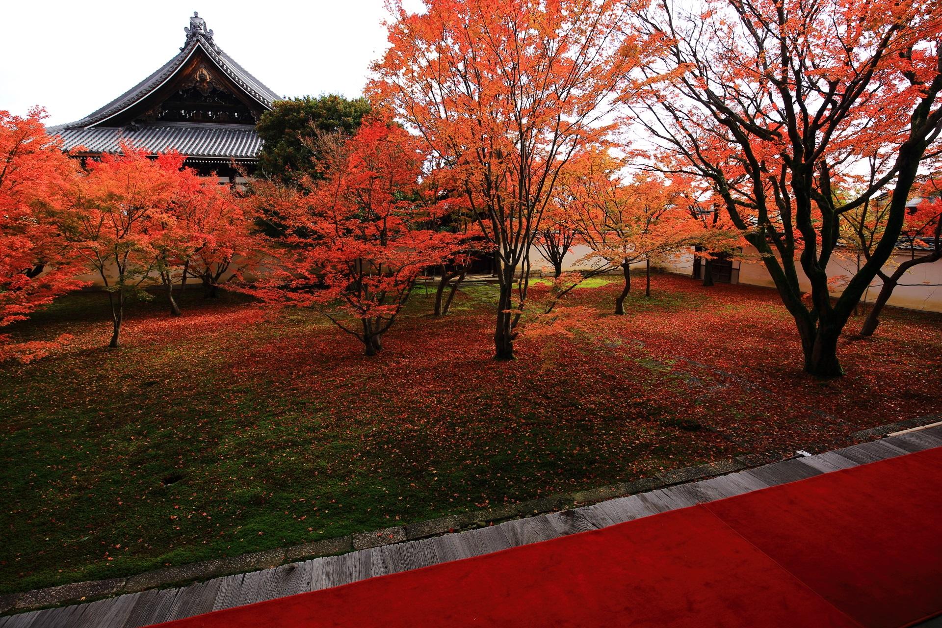 妙覚寺の紅葉で溢れる庭園を演出する赤い絨毯