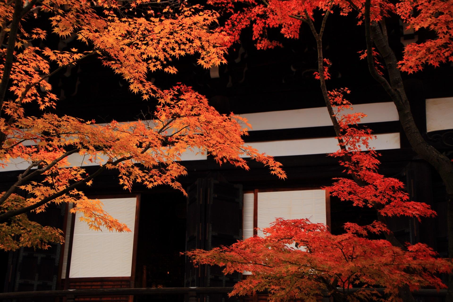 本堂を背景にした紅葉の絵になる秋の風景
