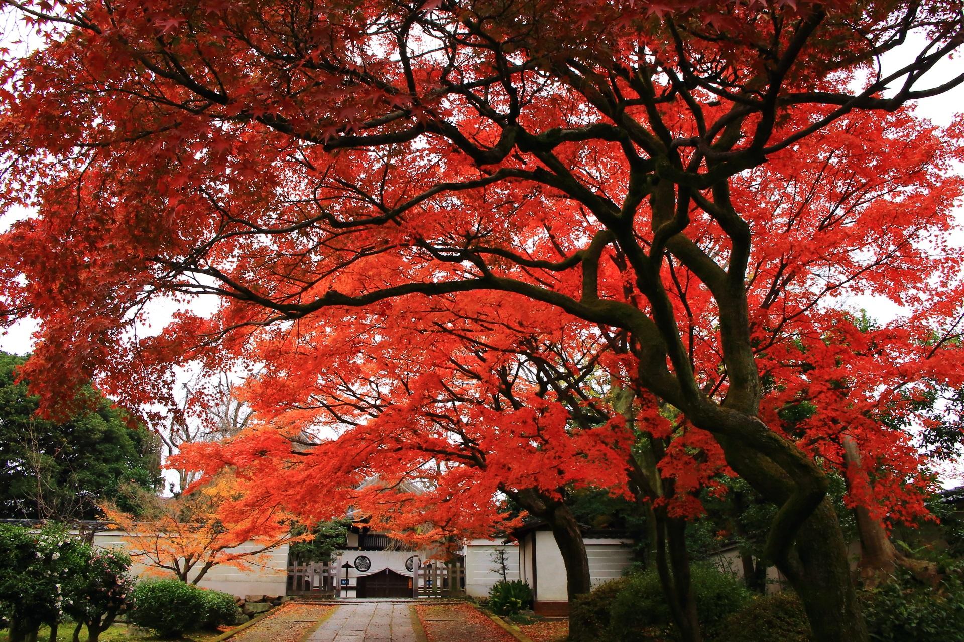 秋色の空間につつまれる養源院の玄関前
