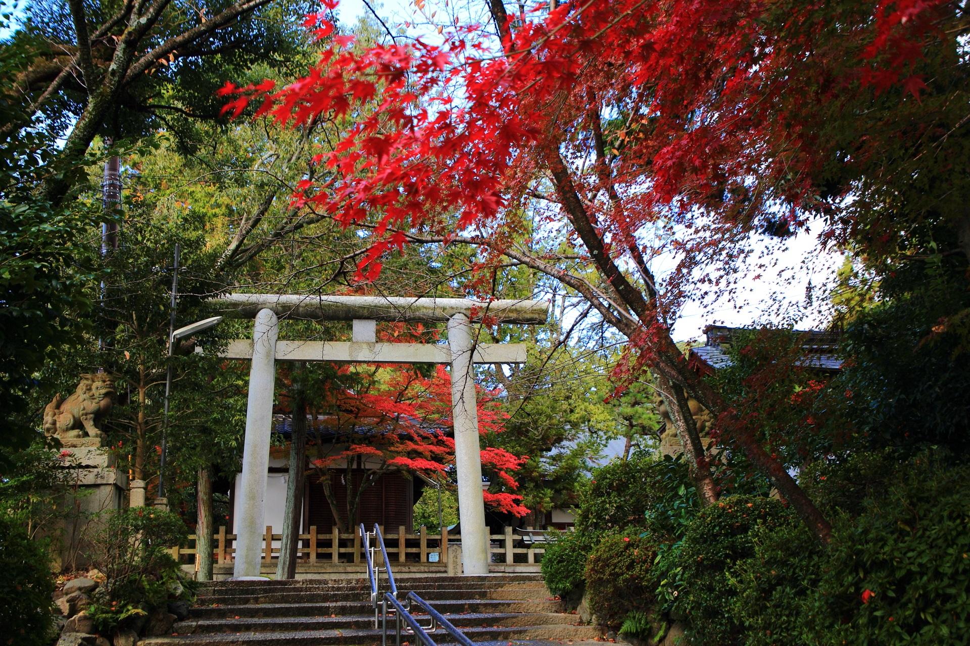 人がまばらな静かな境内を彩る紅葉