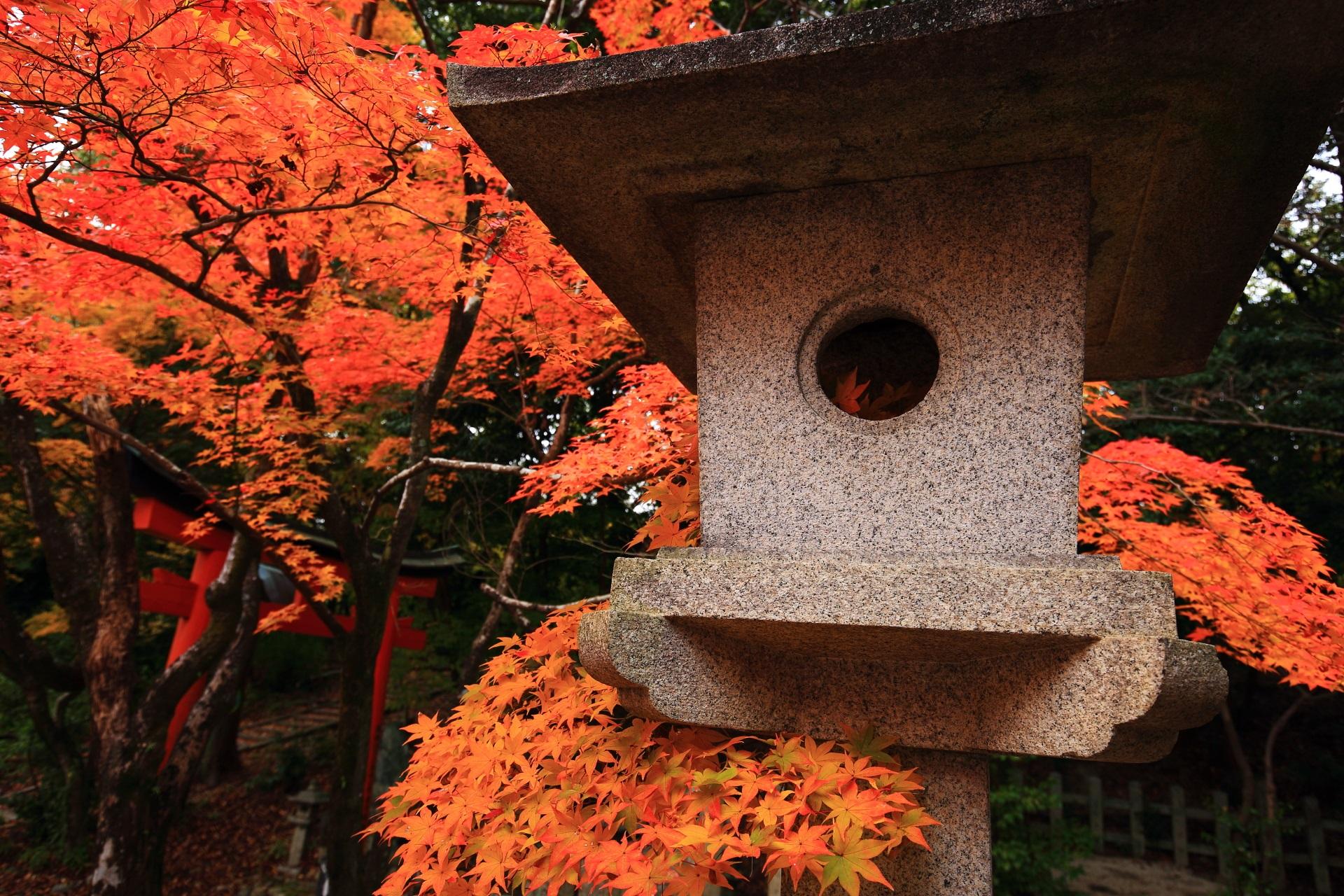 竹中稲荷神社の燈籠から顔を出す元気いっぱいの紅葉