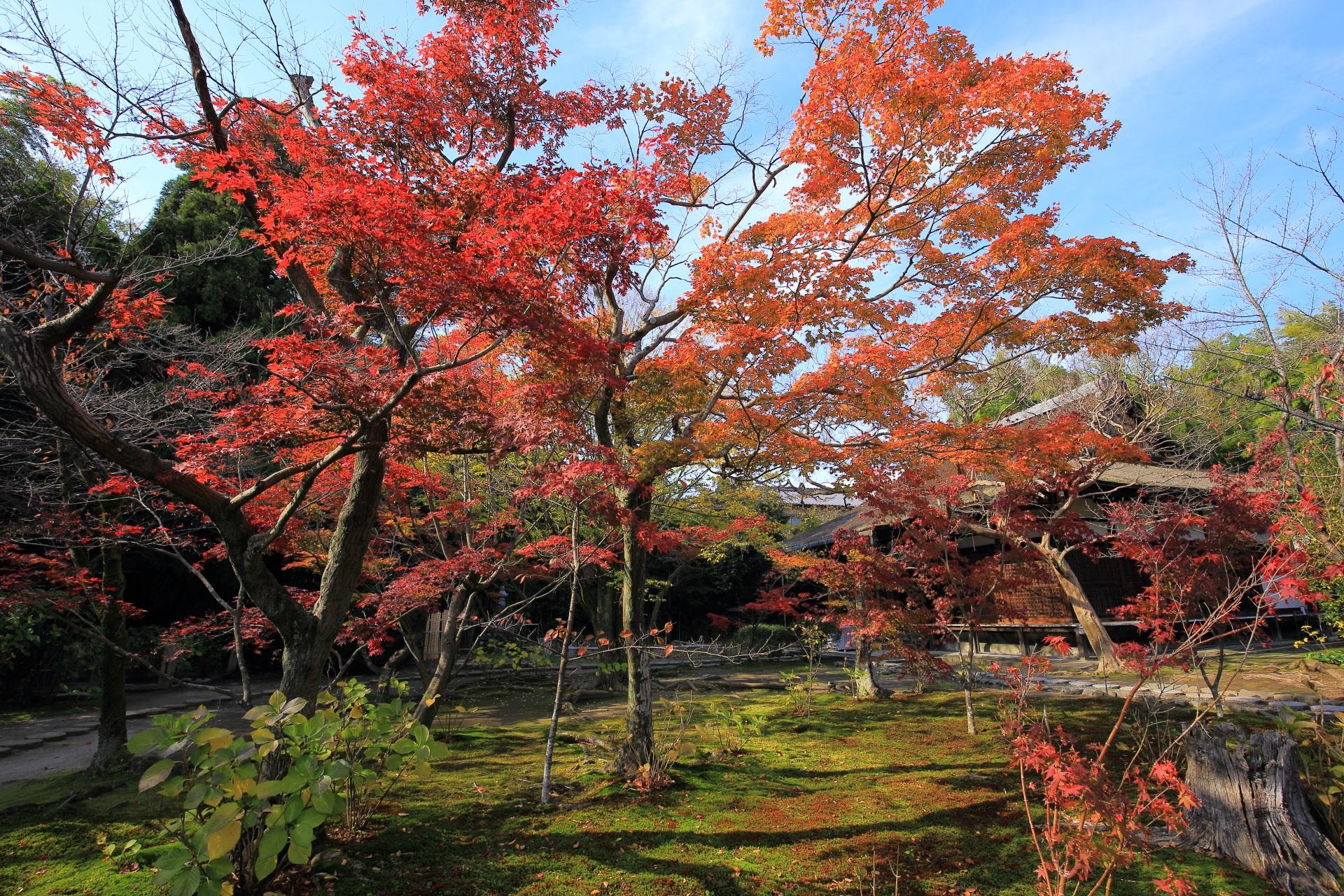 勧修寺の本堂前の庭園の見ごろの紅葉