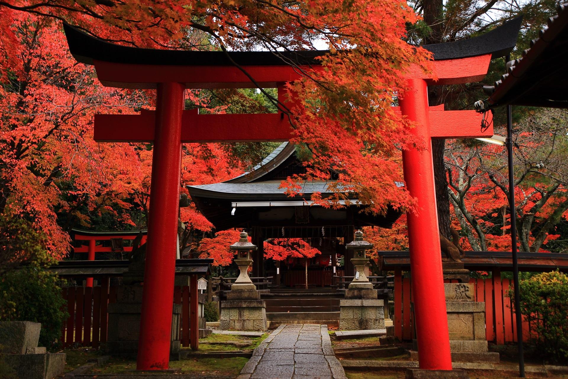 鮮やかな紅葉につつまれる竹中稲荷神社の鳥居と拝殿