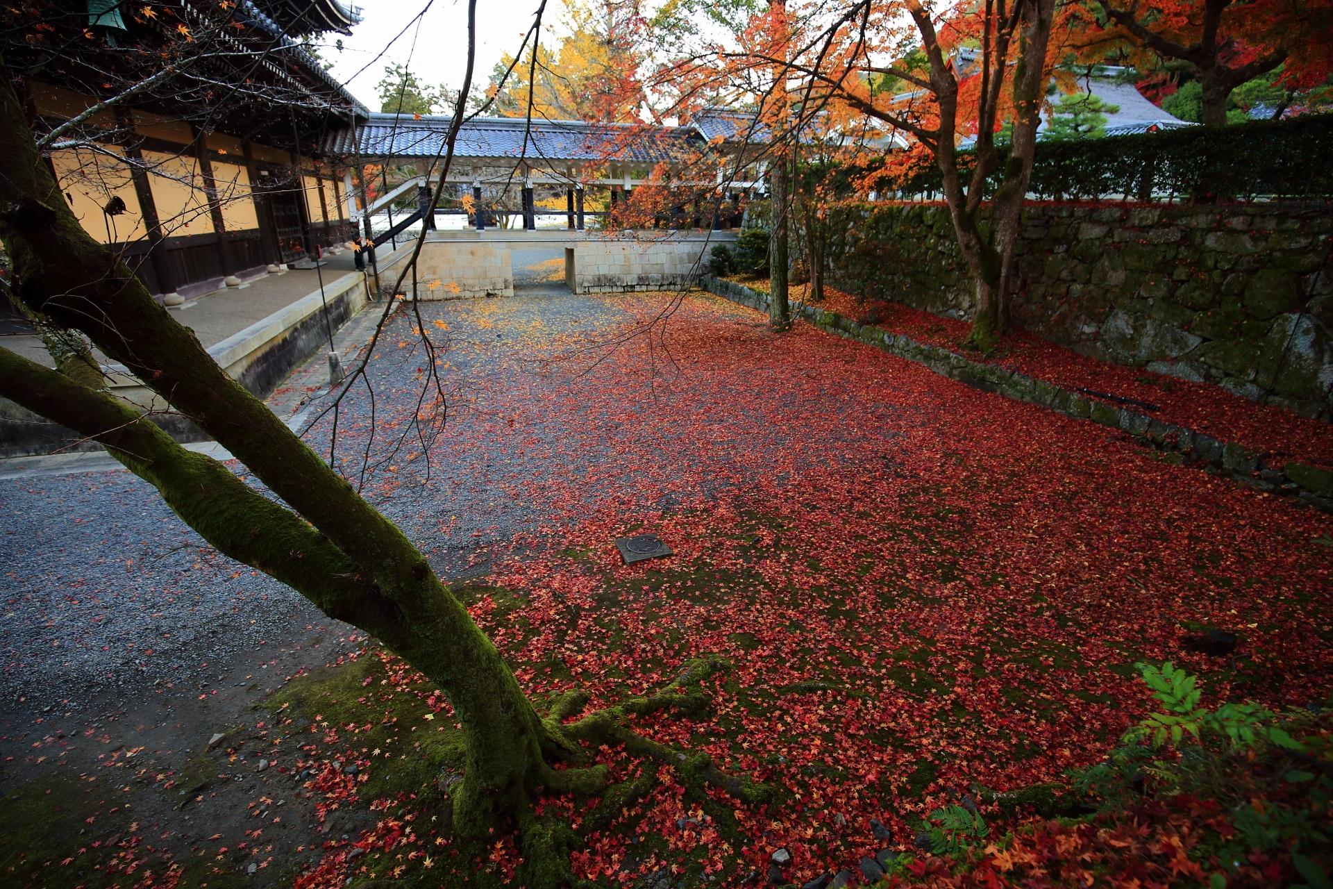 南禅寺の法堂裏の散り紅葉