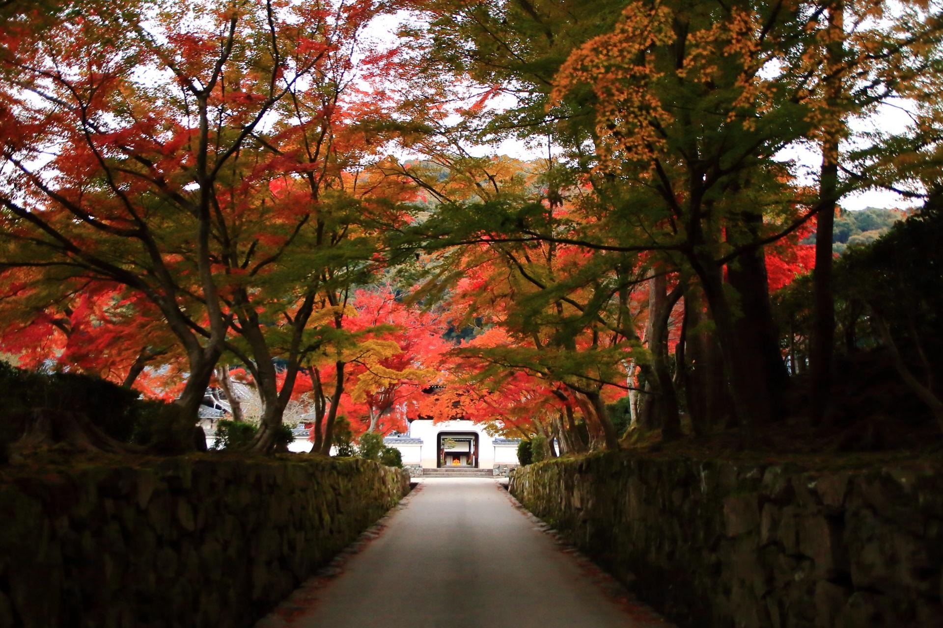 秋の彩りにつつまれた琴坂と興聖寺の山門