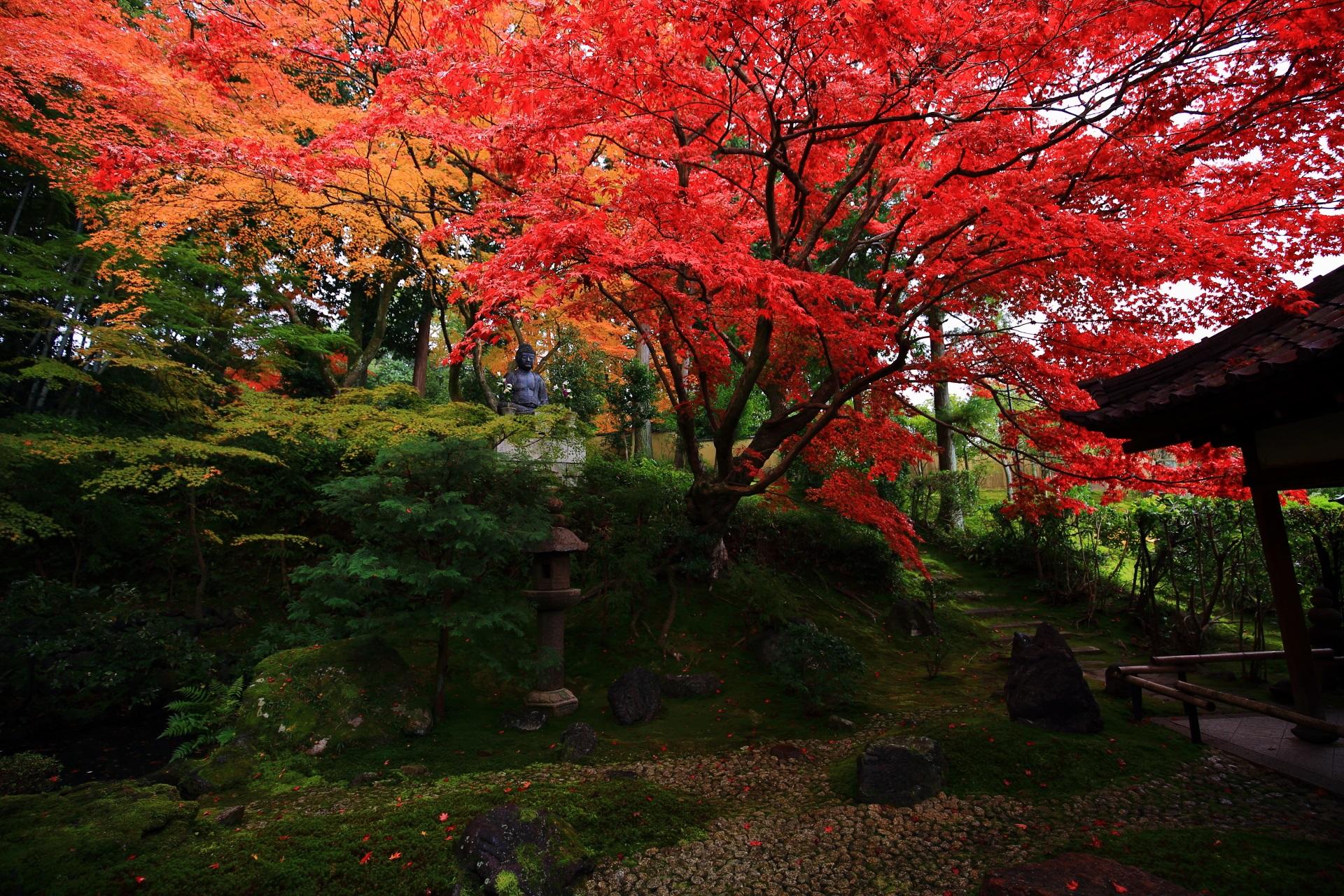 栄摂院の庭園全体をつつむ豪快に色づいた赤とオレンジの紅葉