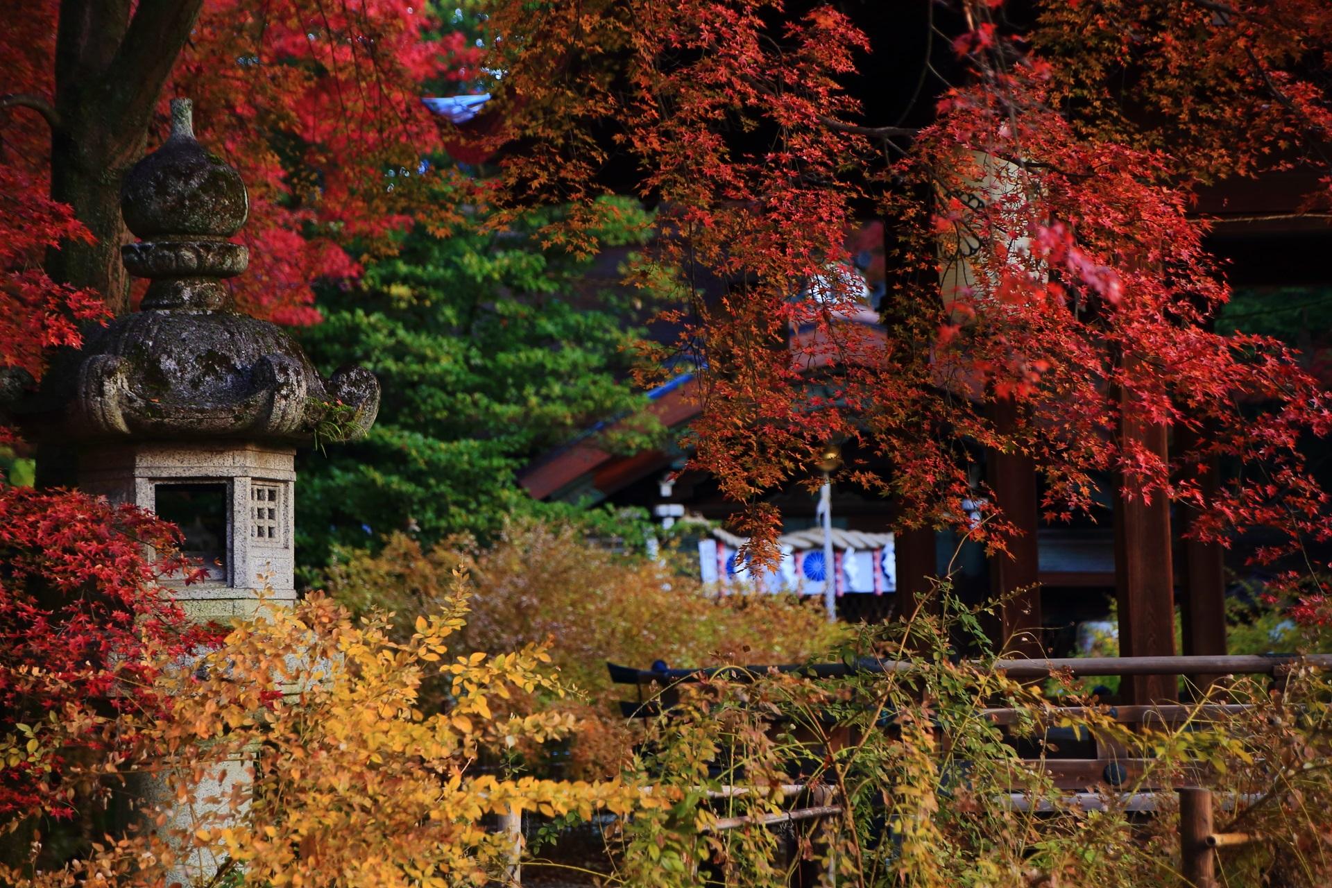 秋風にそよぐ華やかで繊細な紅葉