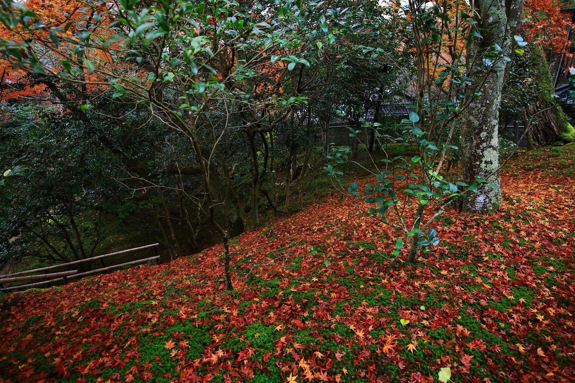 苔やたくさんの種類の木々を彩る豪快な散り紅葉
