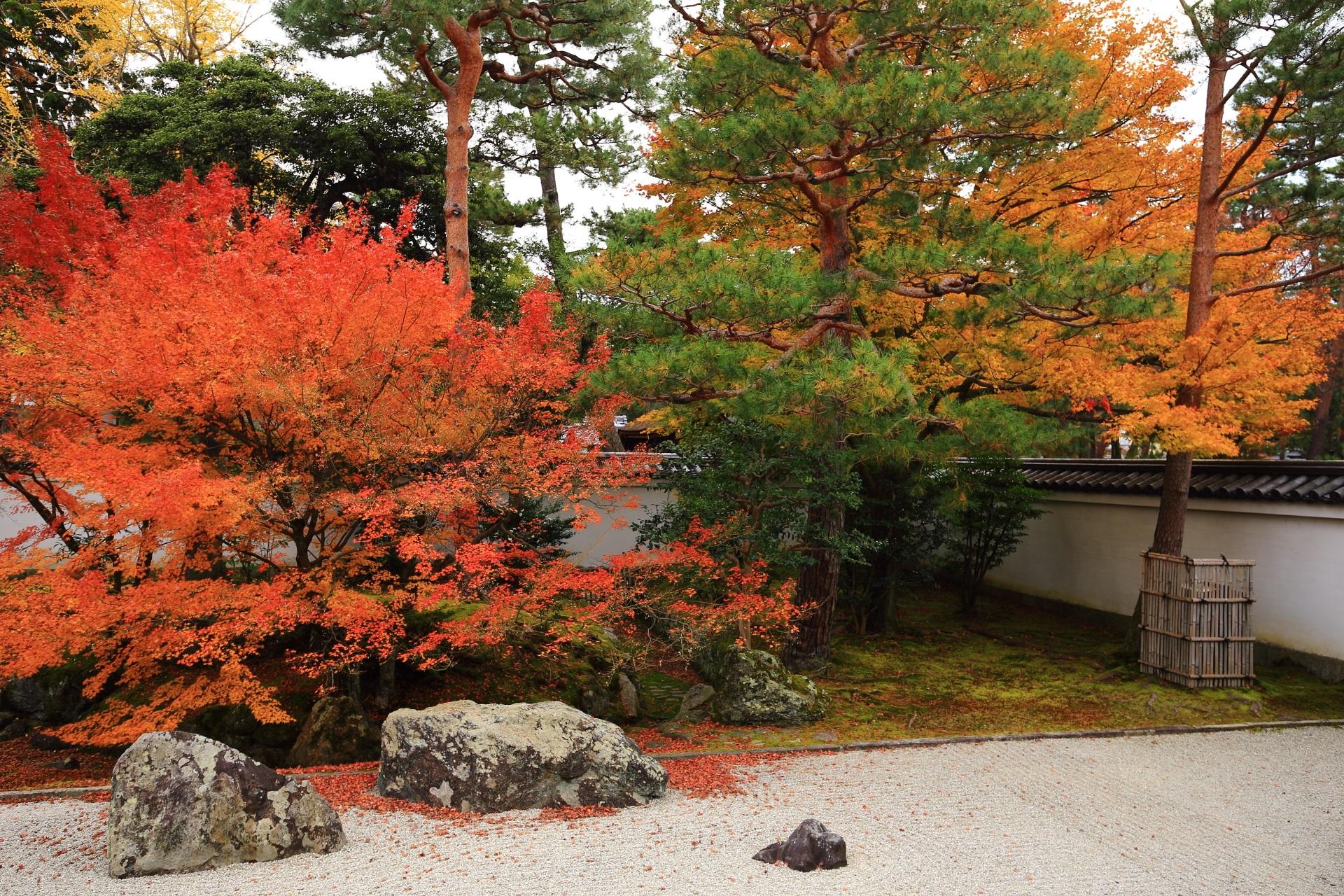 黄色い紅葉が色づく開山堂庭園の西側の紅葉
