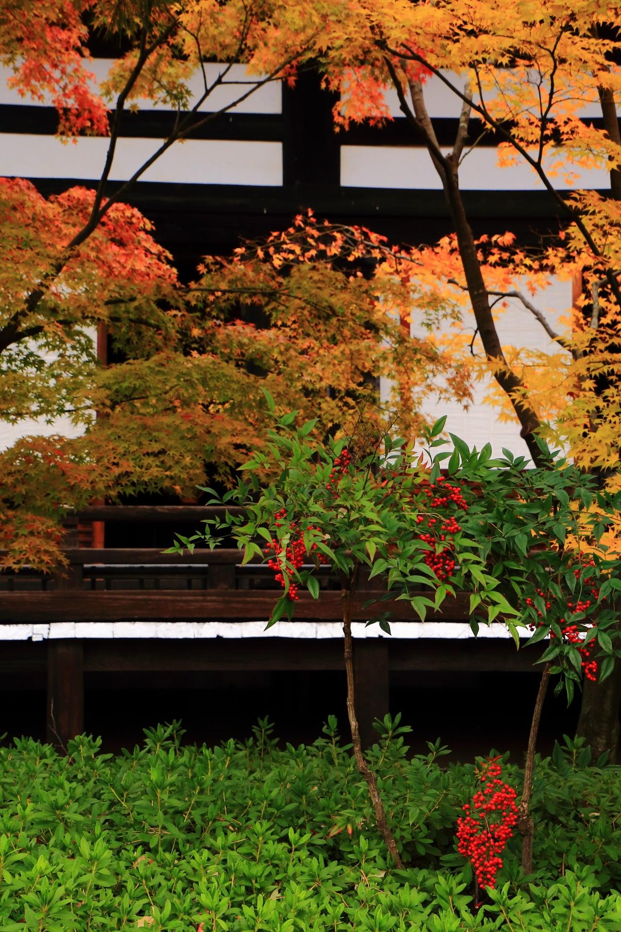 妙顕寺の本堂を彩る秋色の紅葉や南天の赤い実