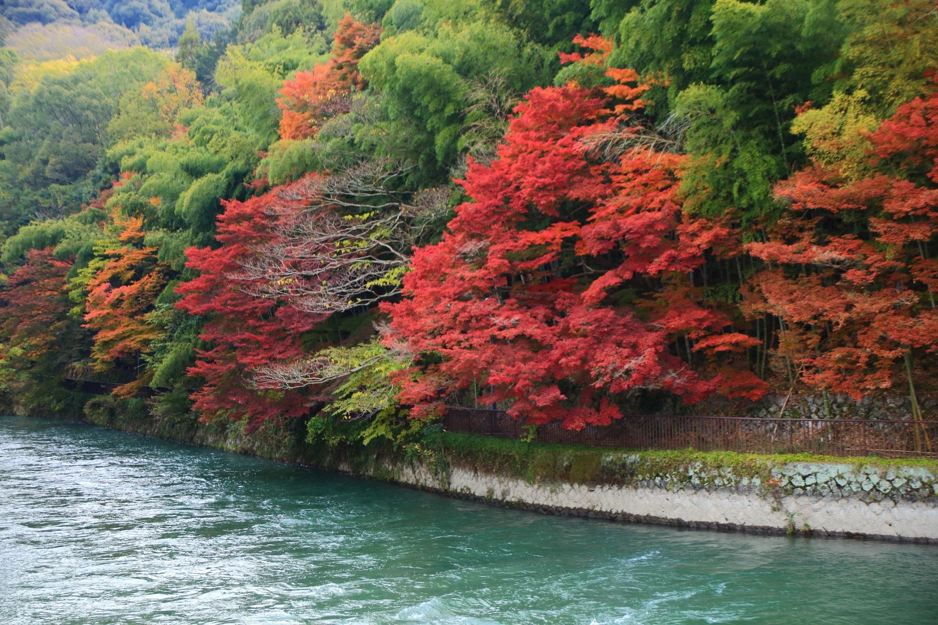 燃えるような真っ赤な紅葉が溢れる宇治川