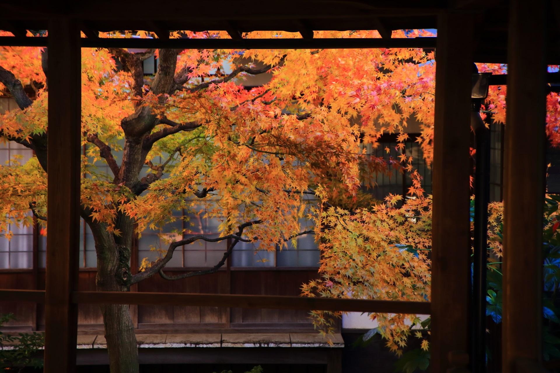 本法寺の溢れる鮮やかなオレンジ色の紅葉