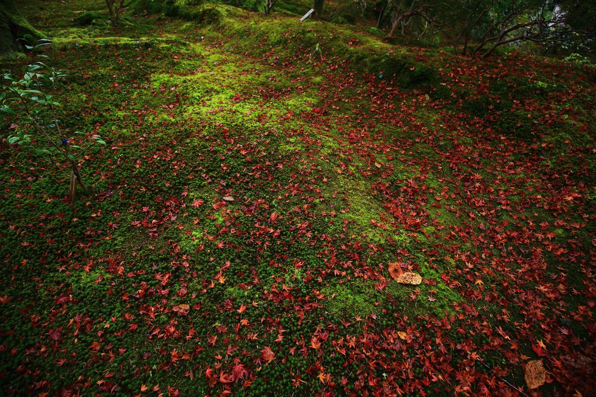 美しい緑の苔を染める深く鮮やかな散り紅葉
