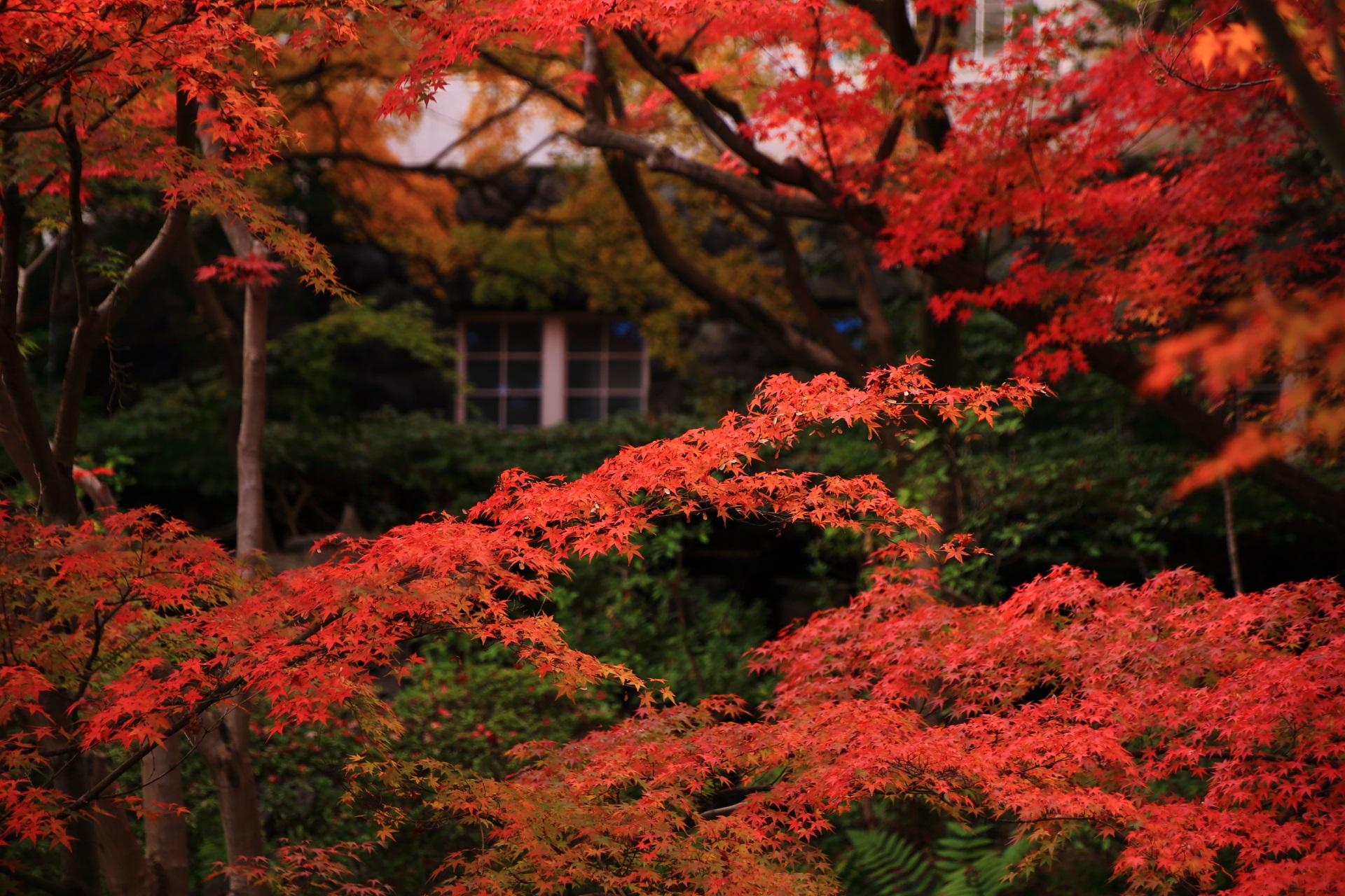 独特の雰囲気を持つ大山崎山荘美術館の紅葉