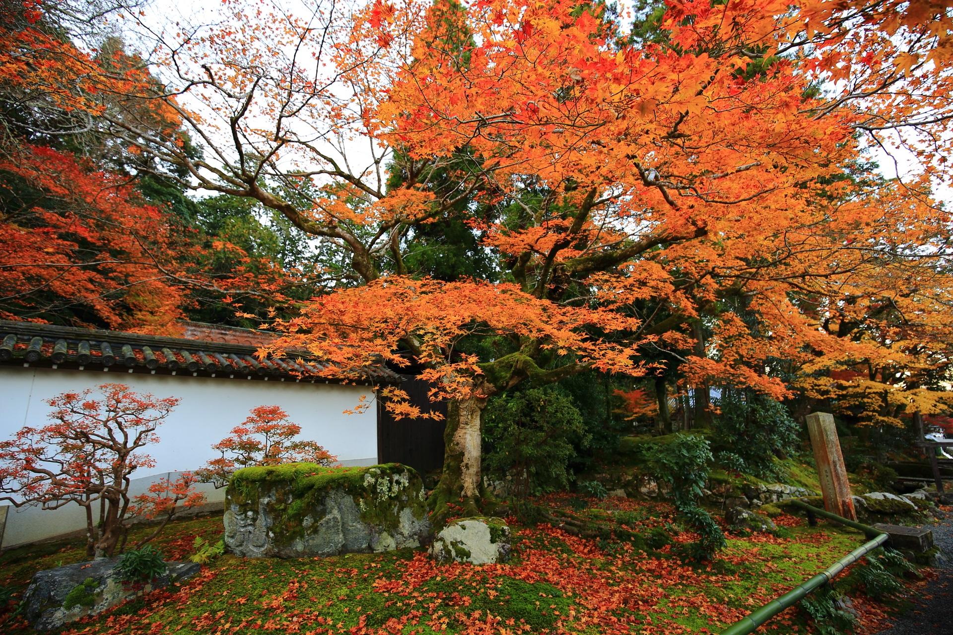 最勝院の境内の片隅で華やぐ立派な紅葉