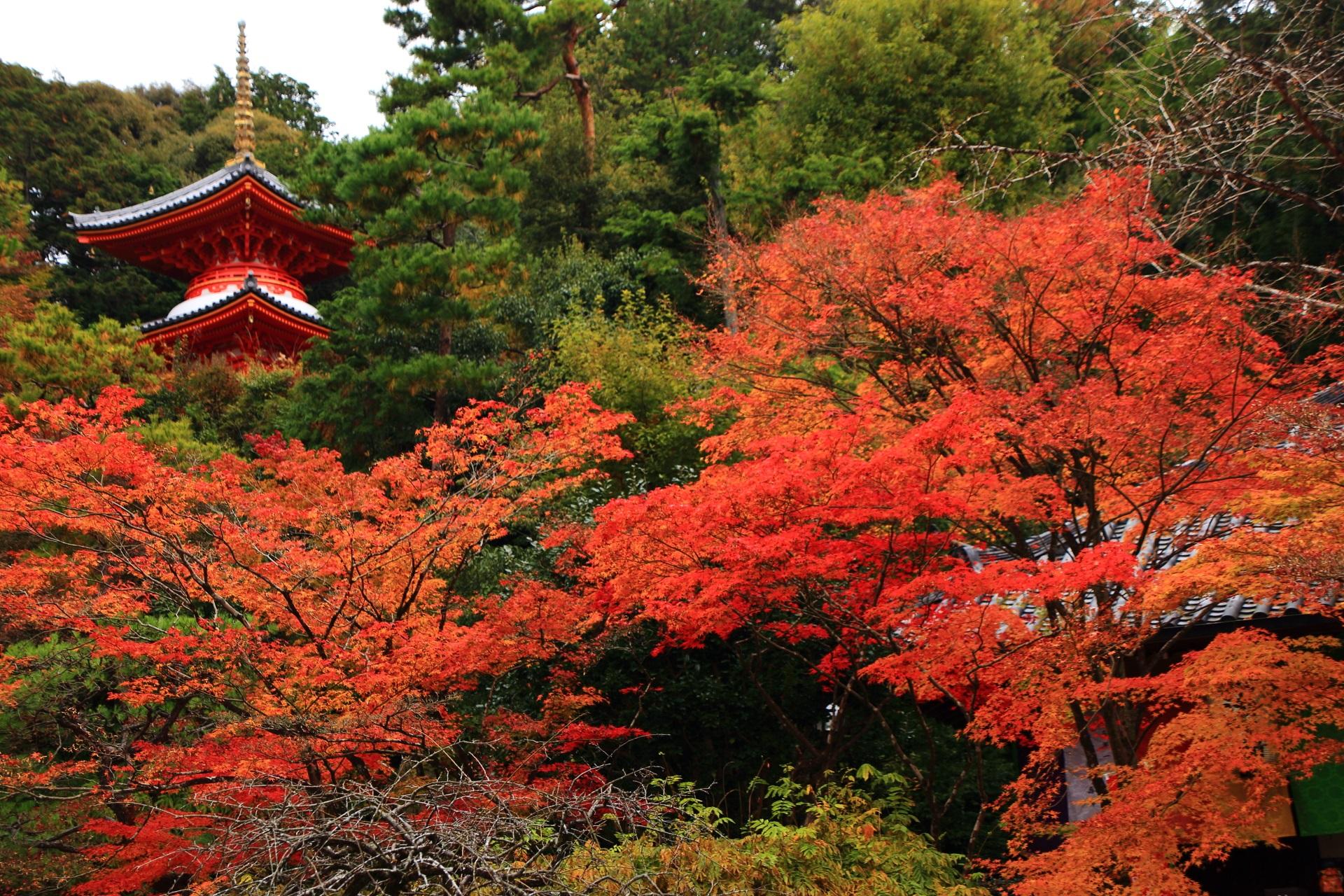 医聖堂とも呼ばれる多宝塔の鮮やかな紅葉