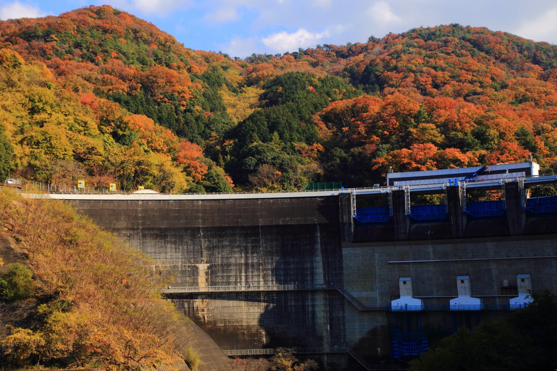 鮮やかな紅葉につつまれた雄大な天ヶ瀬ダム