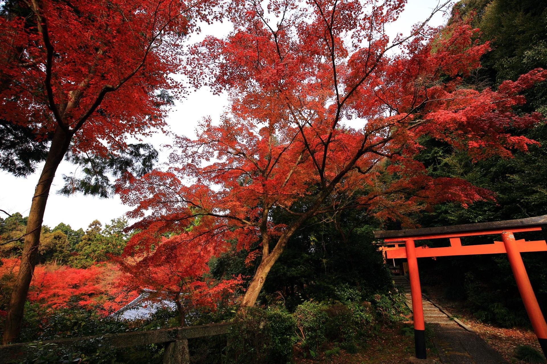 来迎院の鎮守社と色鮮やかな紅葉