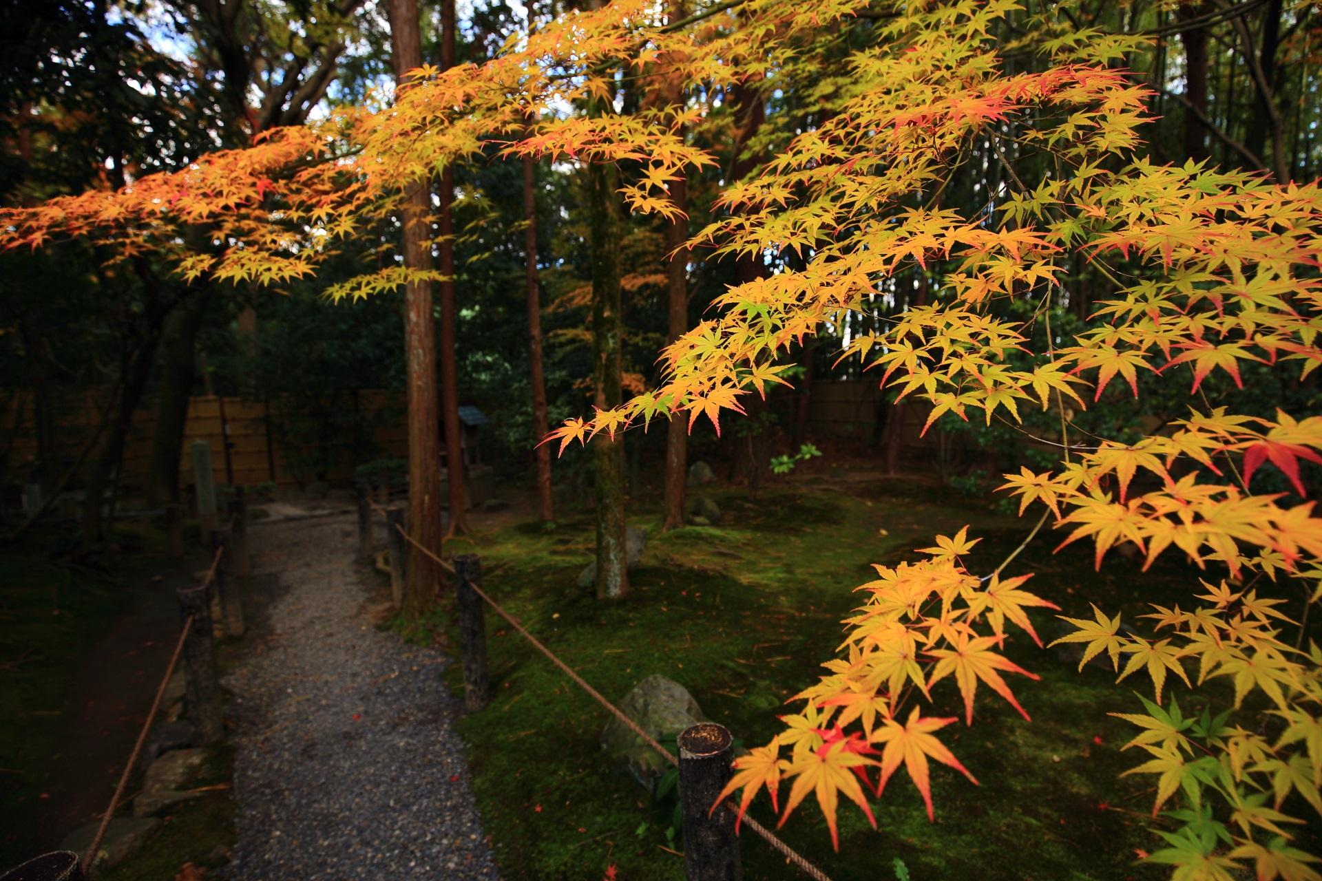 桂春院の秋風に揺らぐ上品な紅葉