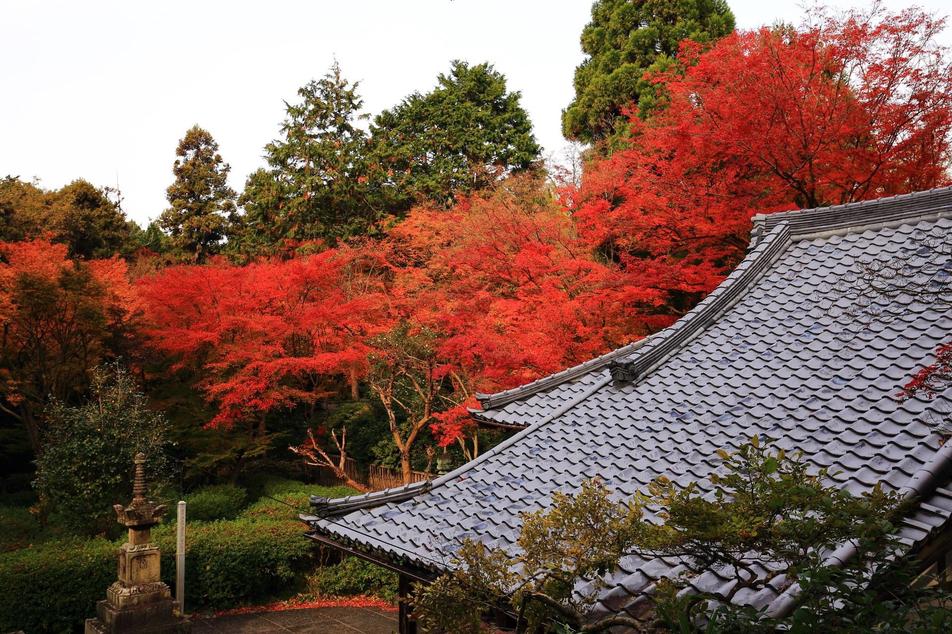 来迎院の静かな境内と本堂を彩る圧巻の紅葉