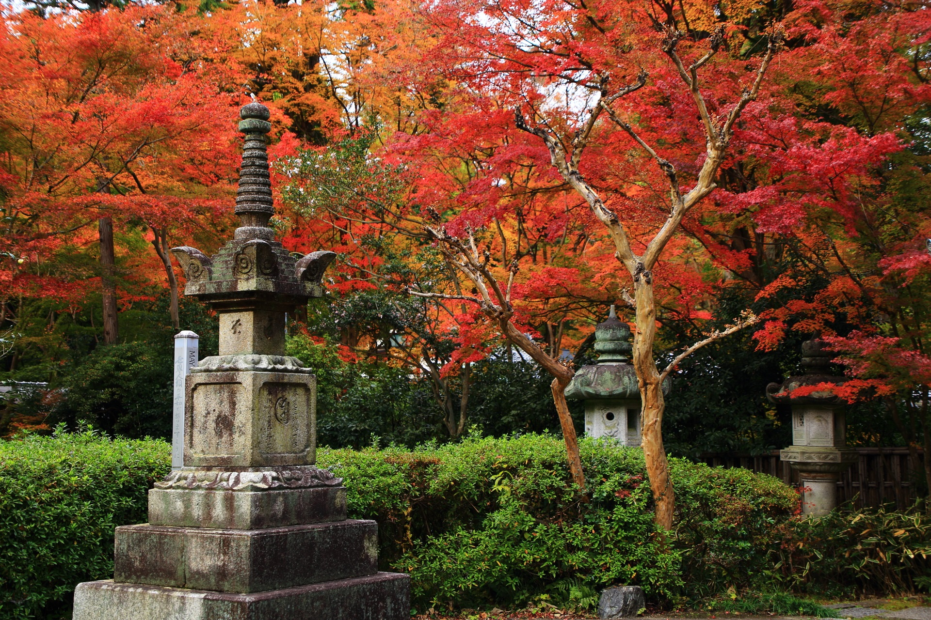 赤やオレンジの紅葉で賑わう来迎院の静かな境内