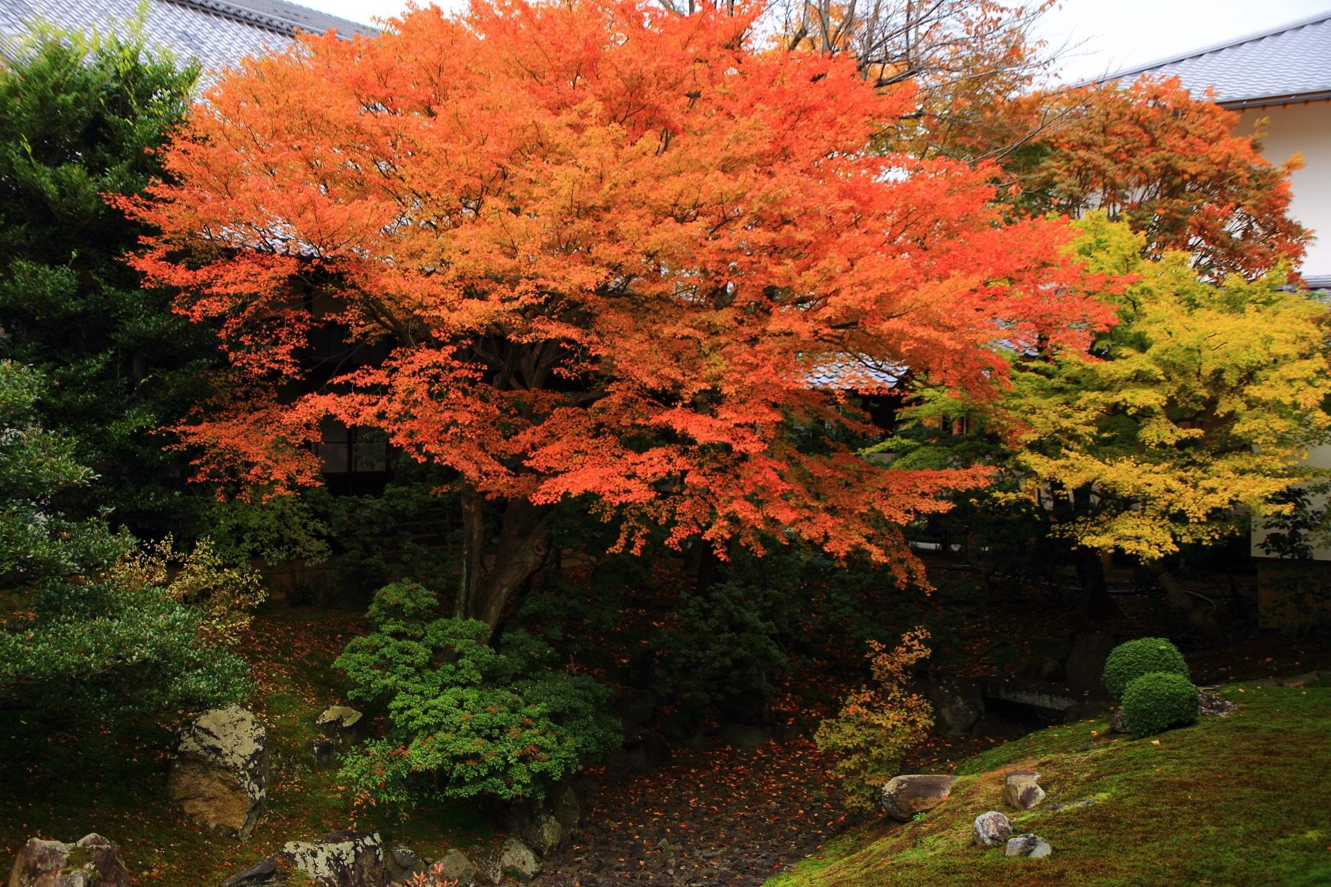 目をひきつける見事に色づく優雅な紅葉