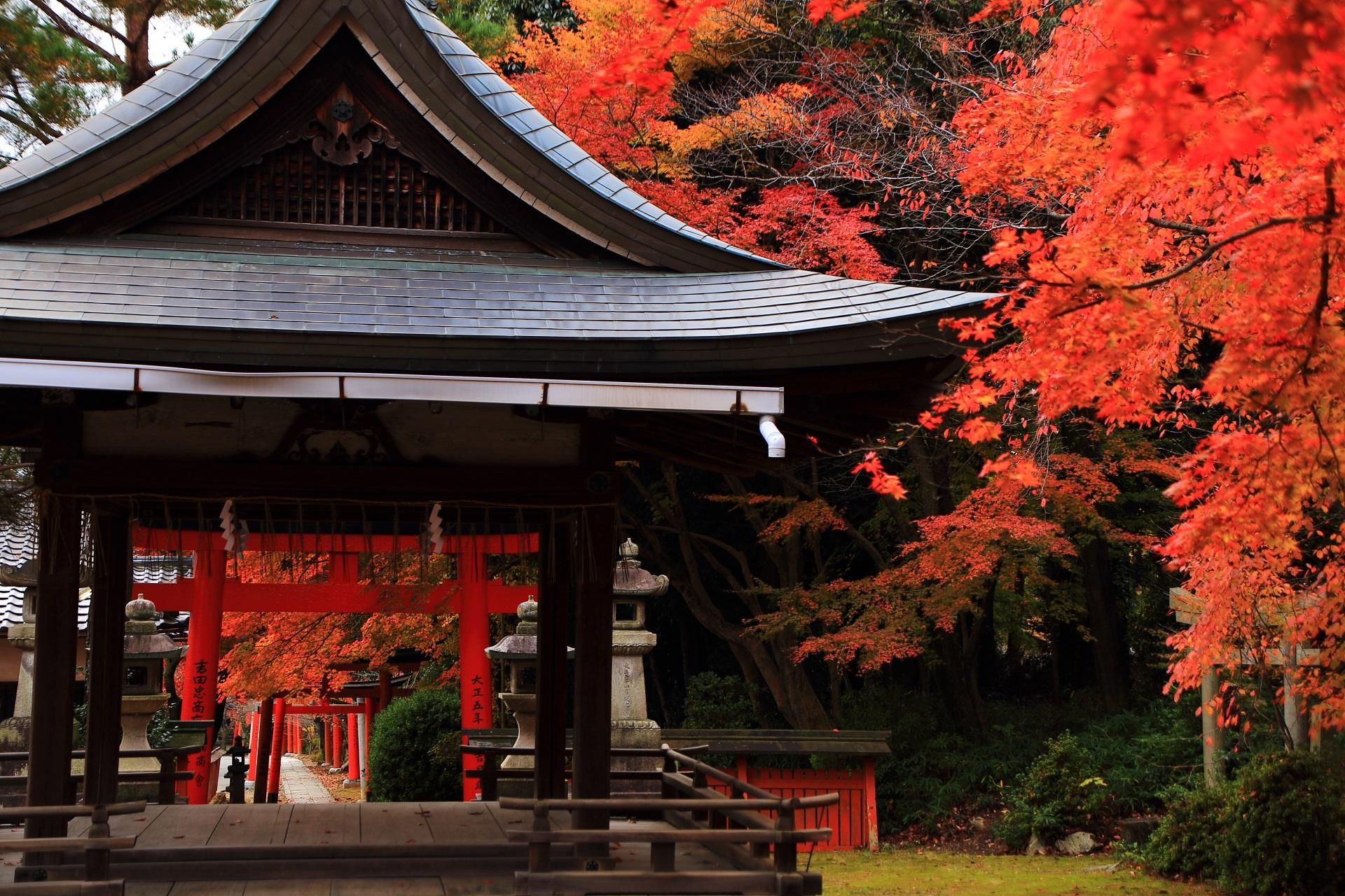 竹中稲荷神社の煌く秋色に染まった拝殿と長い鳥居の参道