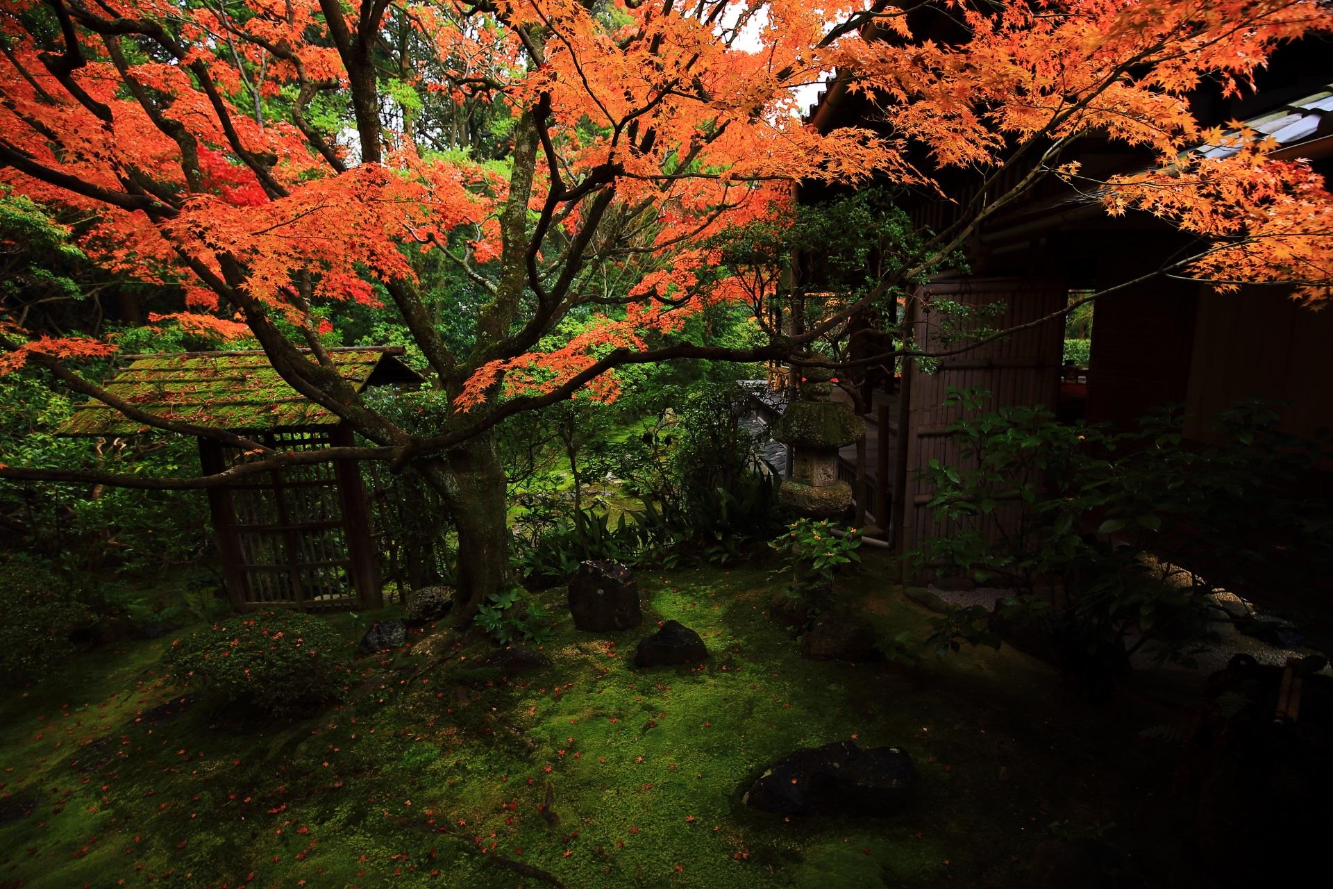 見事に色づいた侘の庭の紅葉