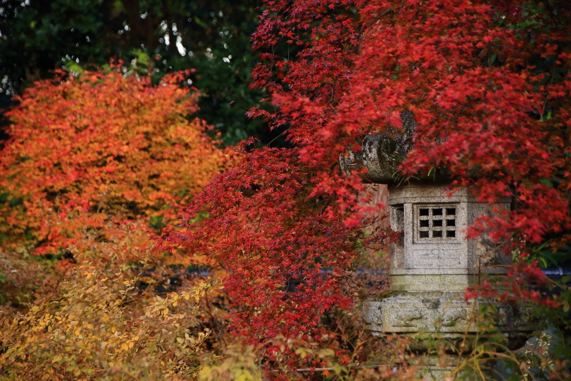 色とりどりの紅葉や秋につつまれる燈籠