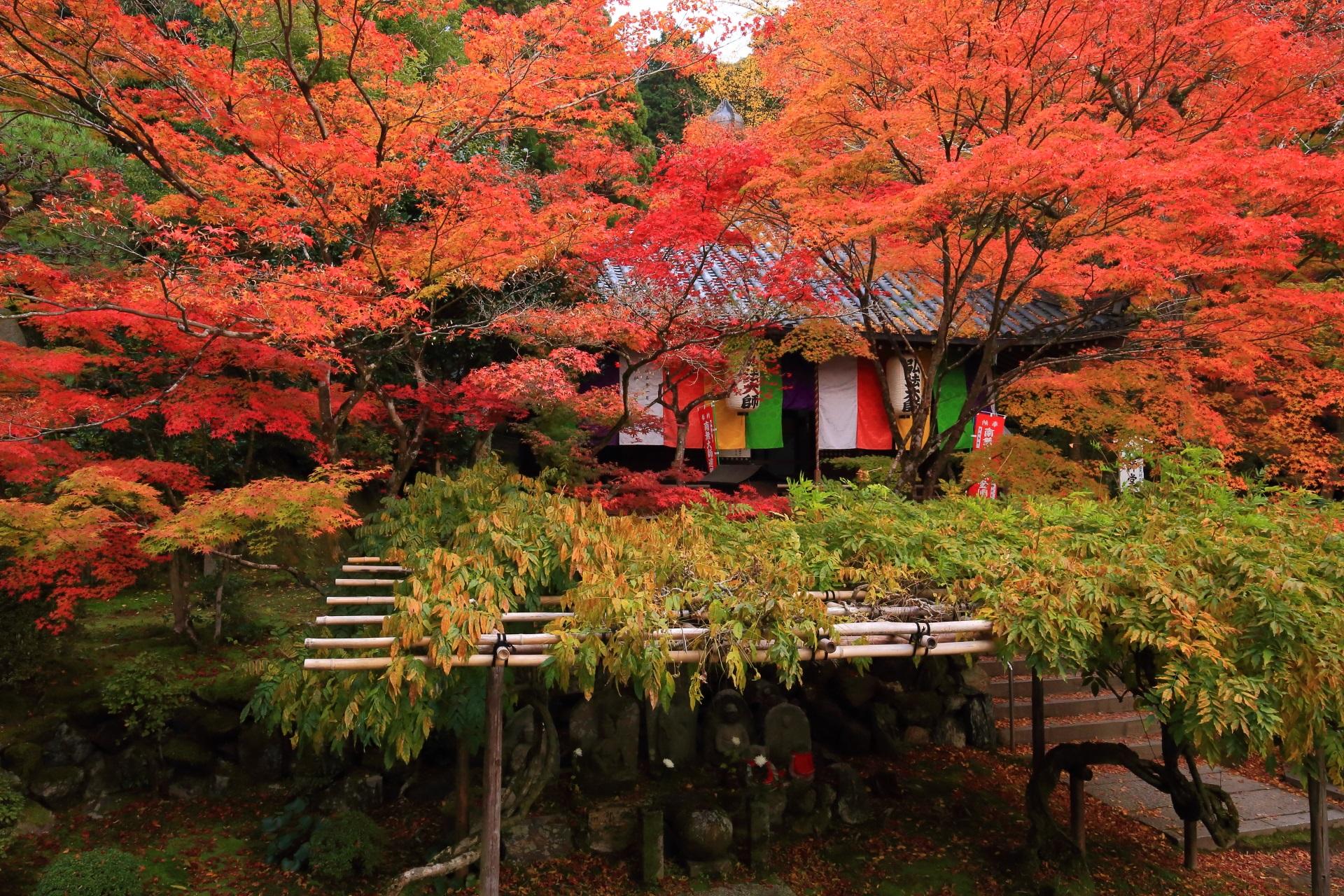 燃えるような鮮やかな色合いの紅葉