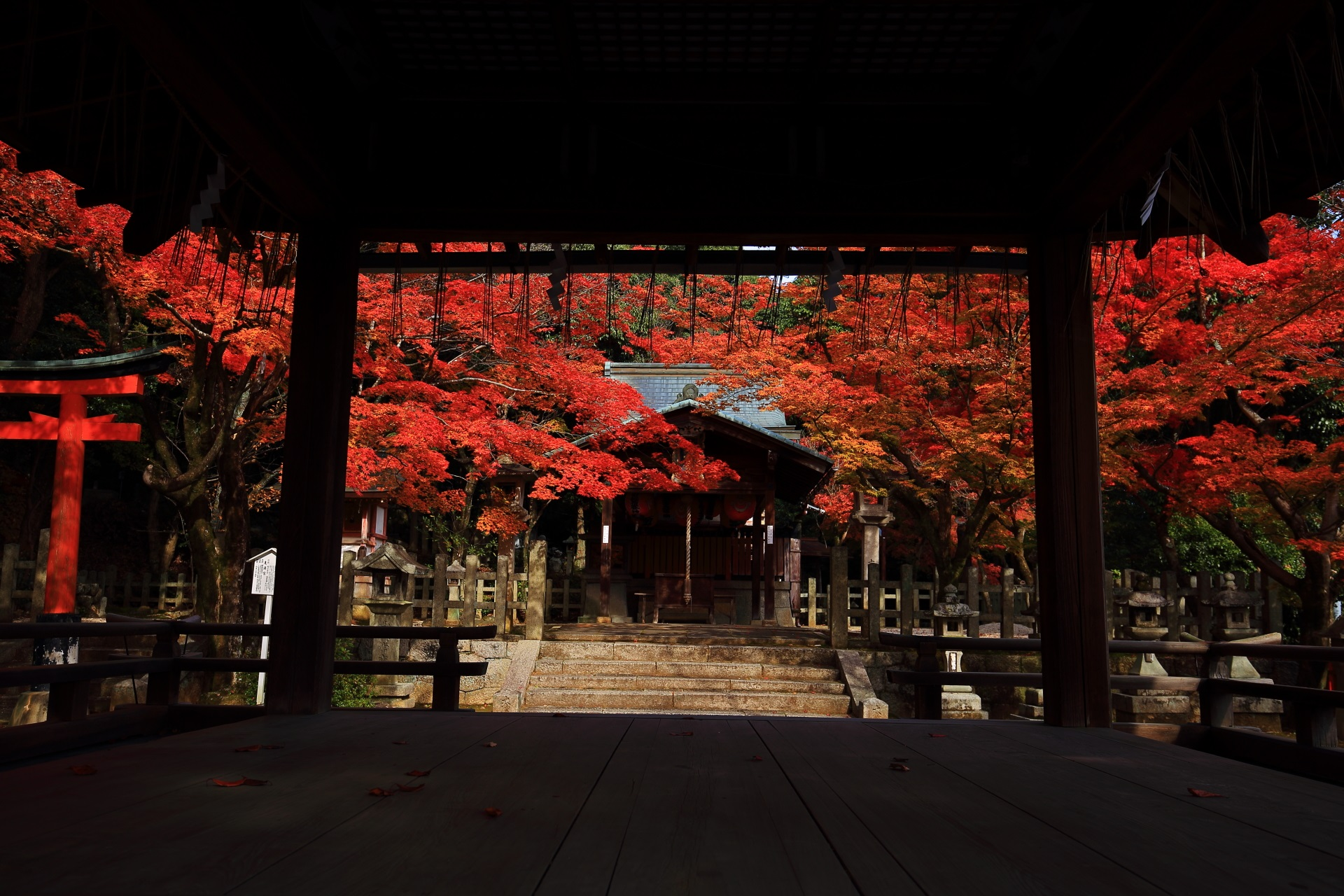 拝殿から眺めた本殿と浮かび上がるような紅葉
