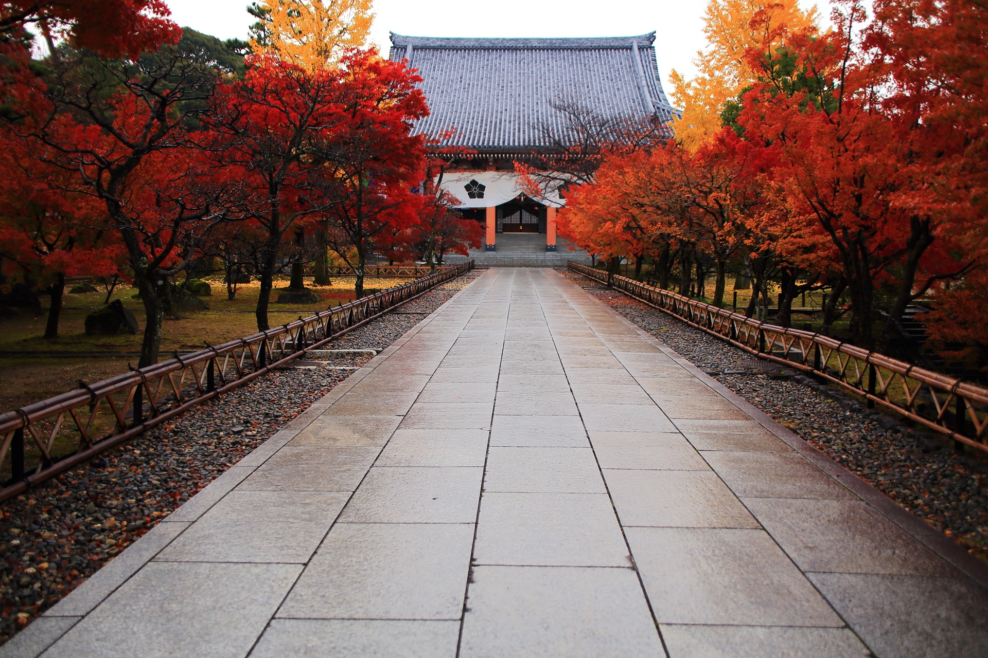 雨が美しさを引き立てる金堂前の多彩な紅葉と銀杏
