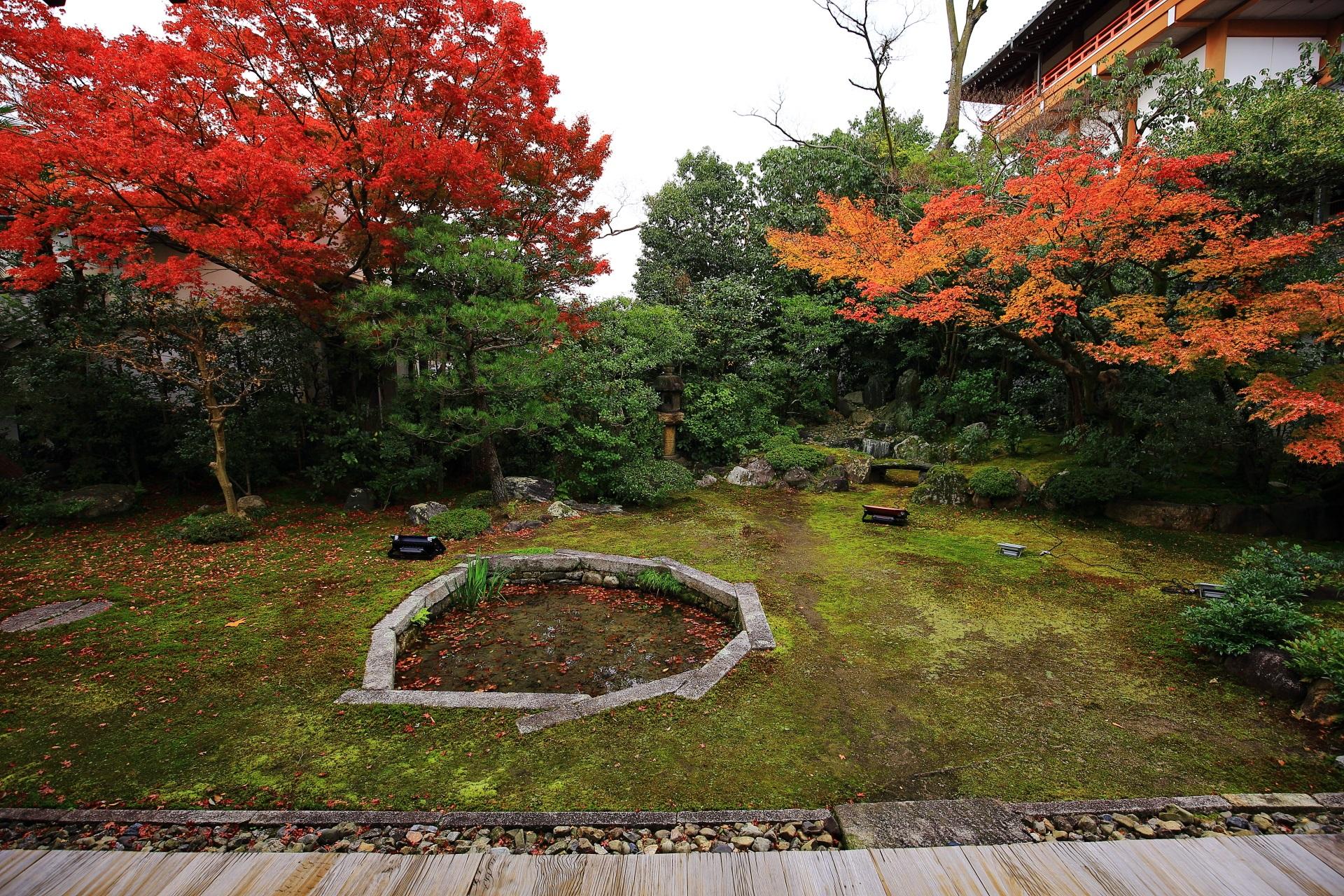 更に色づきが進む晩秋の巴の庭の紅葉