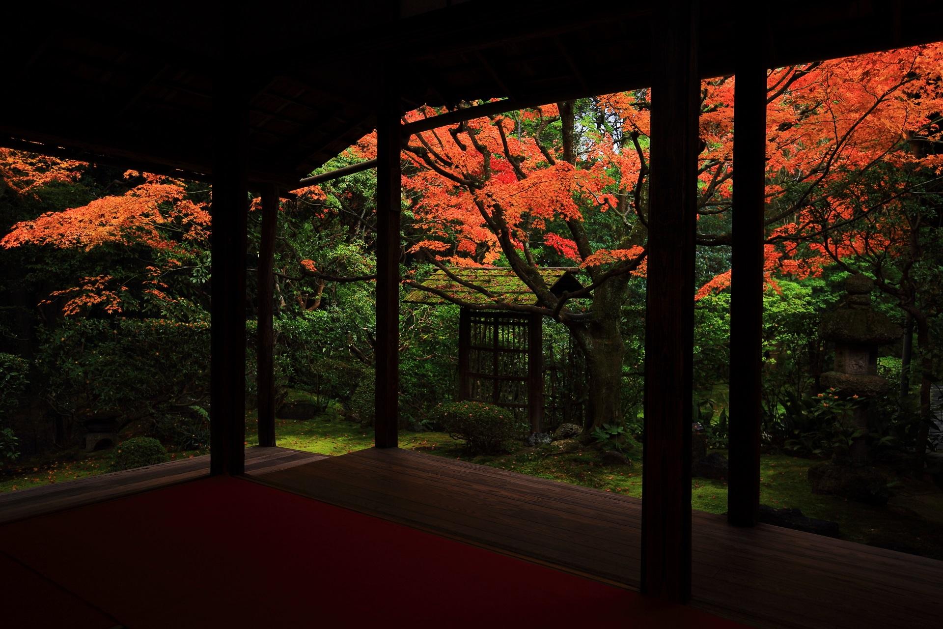 風情ある深い緑の庭園で光るような鮮やかな紅葉