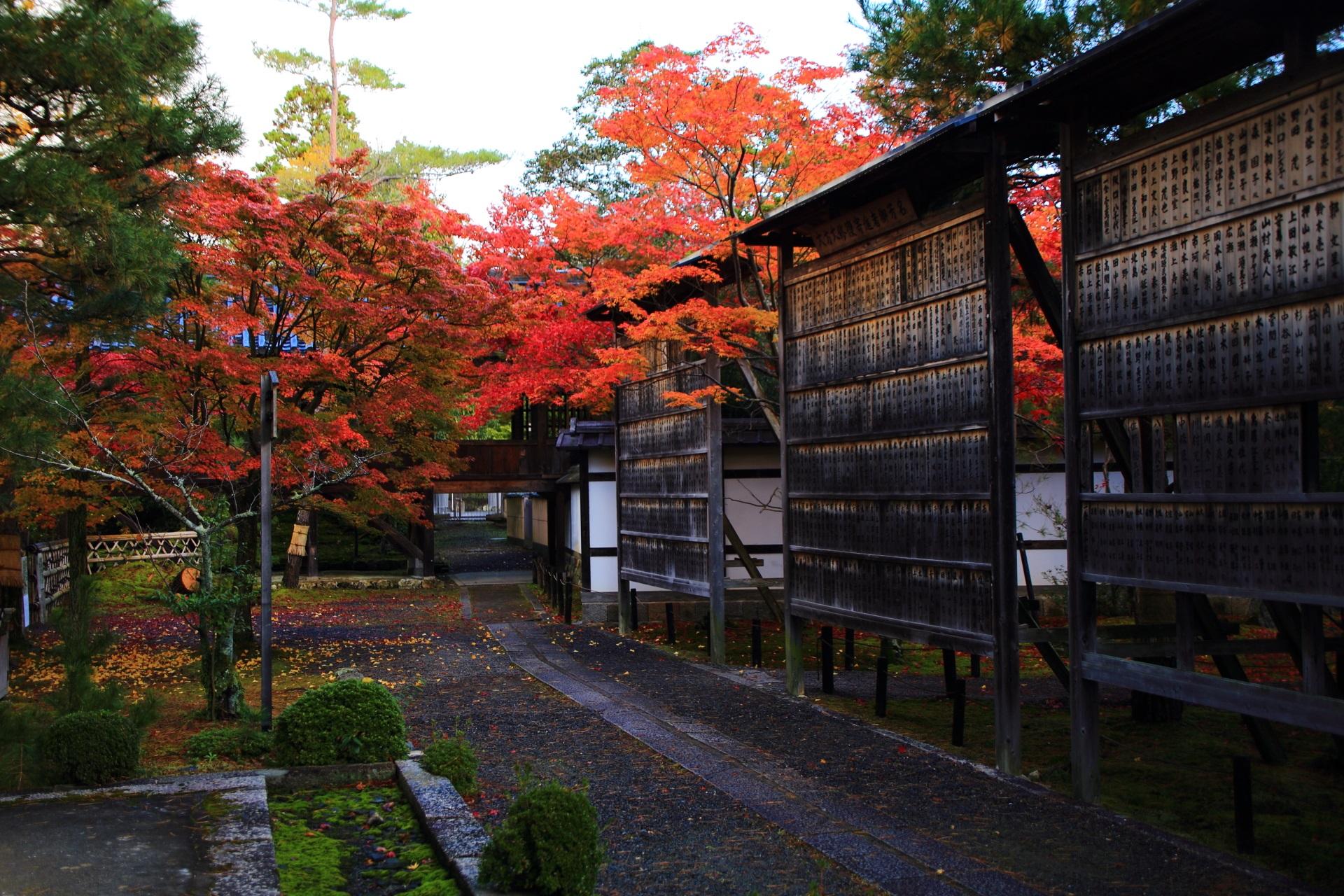 静かな境内で燃え上がるような鮮やかな紅葉