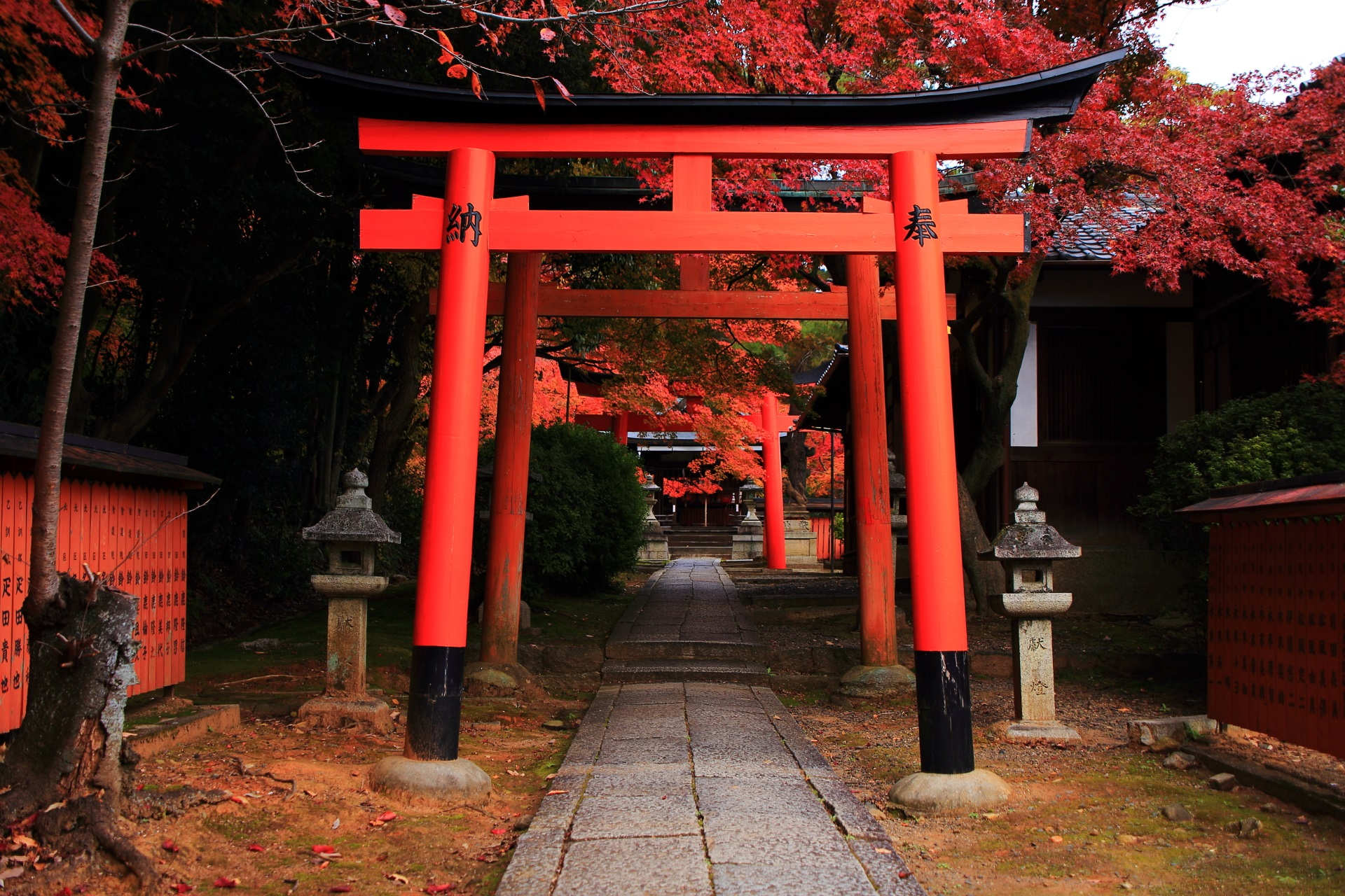 竹中稲荷神社の素晴らしい鳥居の紅葉と秋の情景