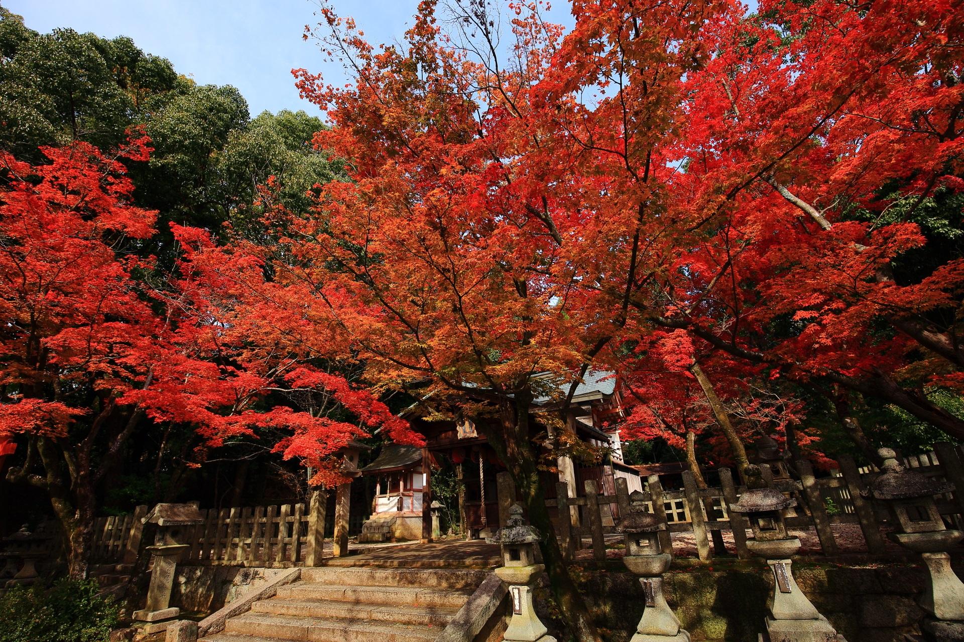 竹中稲荷神社の太陽を浴びて煌く多彩な紅葉