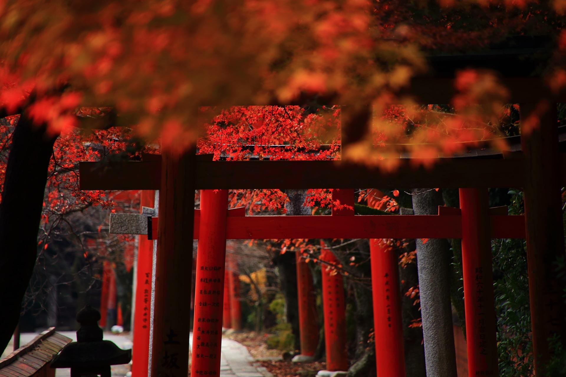 竹中稲荷神社の厳かな雰囲気も漂う参道と鳥居を彩る多様な紅葉