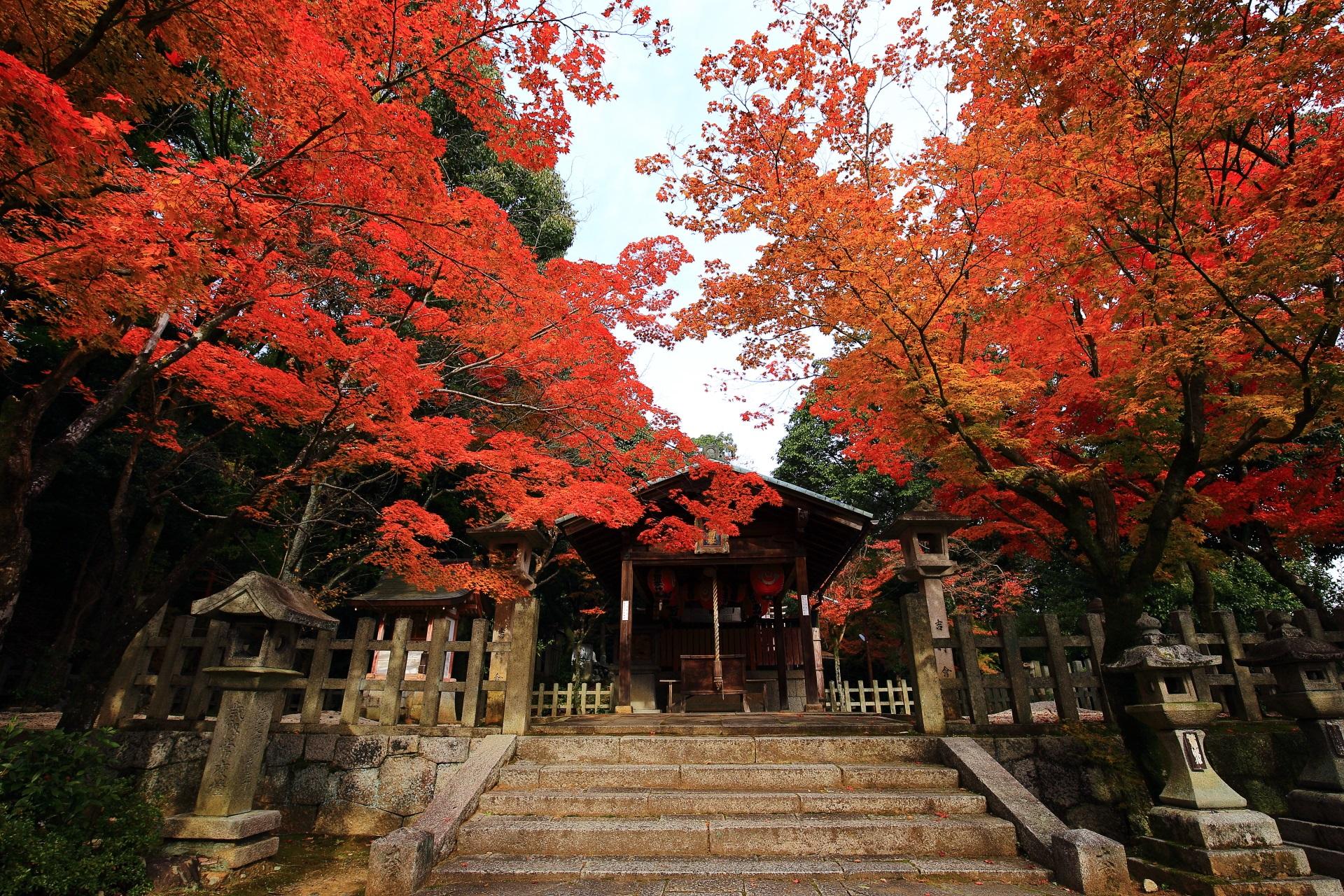 竹中稲荷神社の本殿を豪快に彩る紅葉