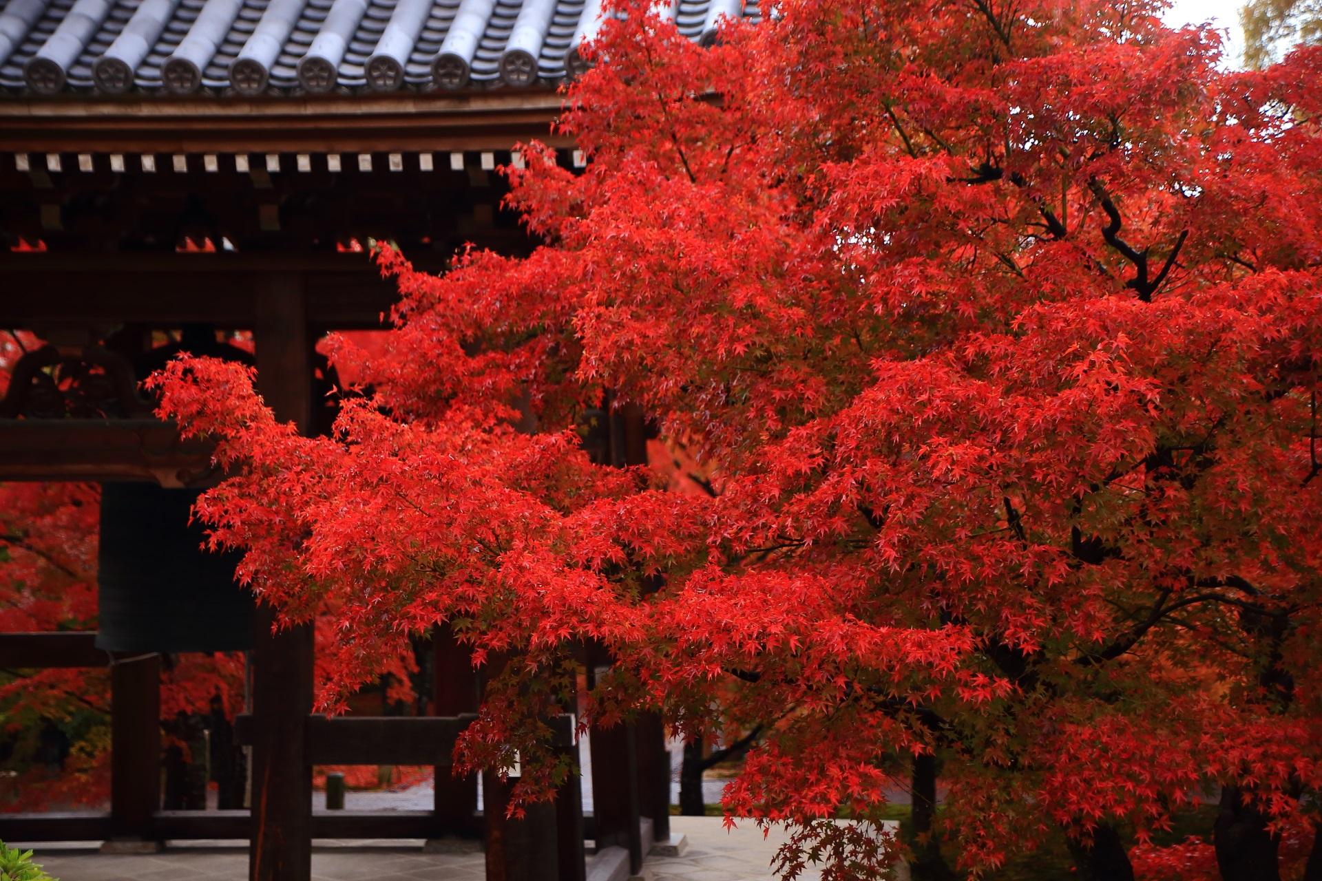 智積院の鐘楼を染める燃え上がるような紅葉