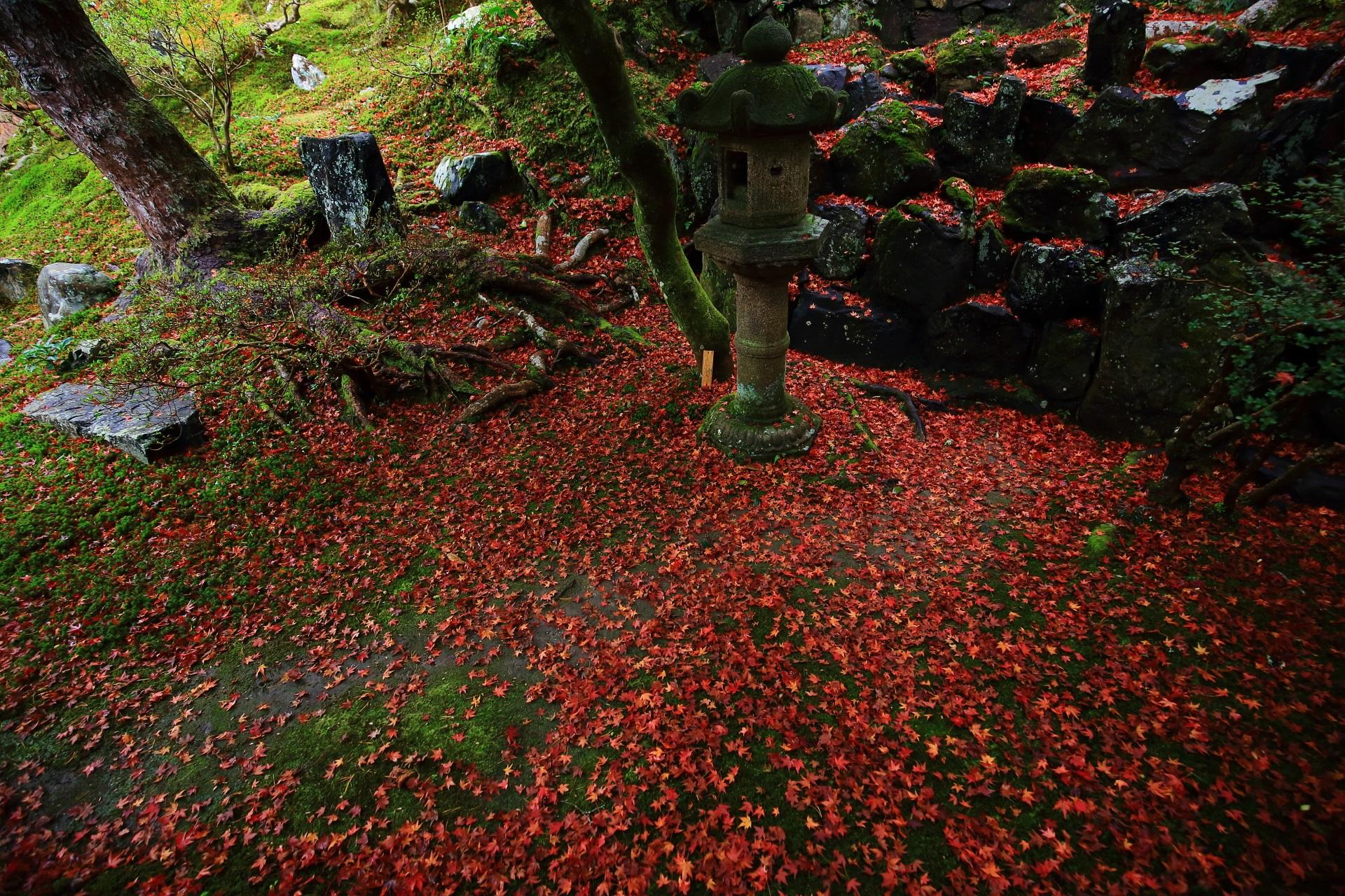 圧巻の散り紅葉につつまれる燈籠や岩の築山