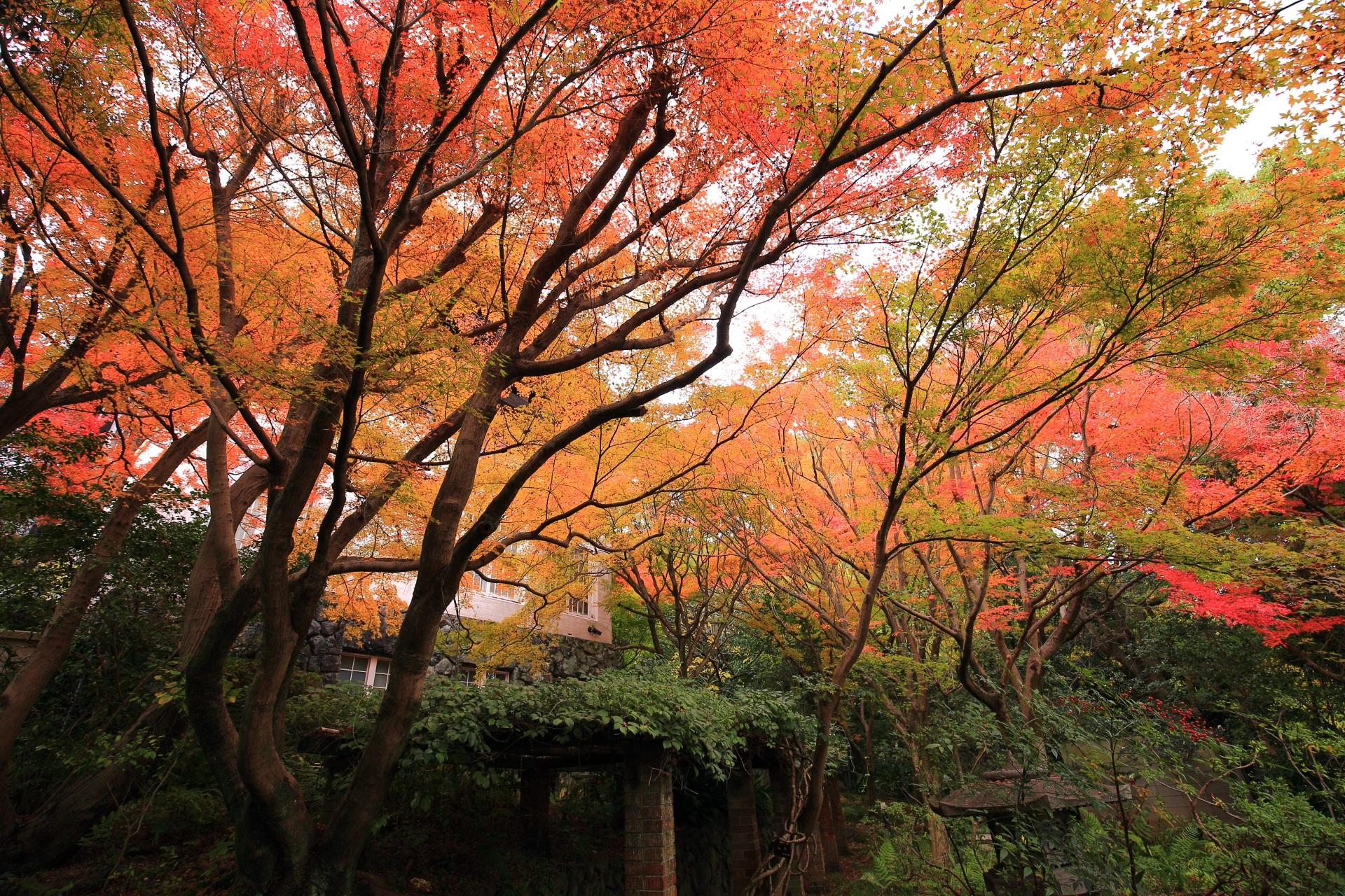 淡く優しい紅葉につつまれる美術館本館前