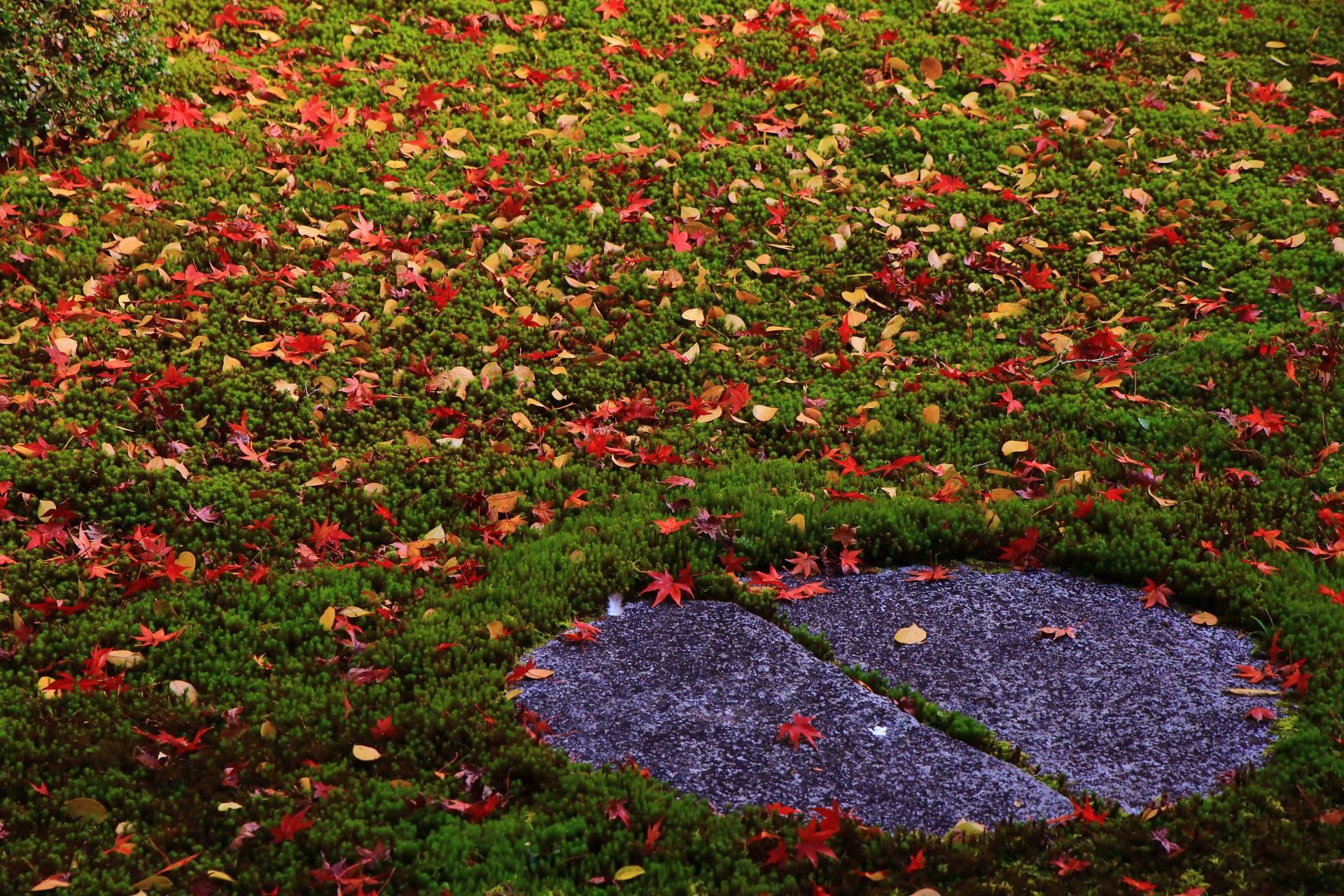 本法寺の秋の巴の庭を染める多種多様で多彩な散り