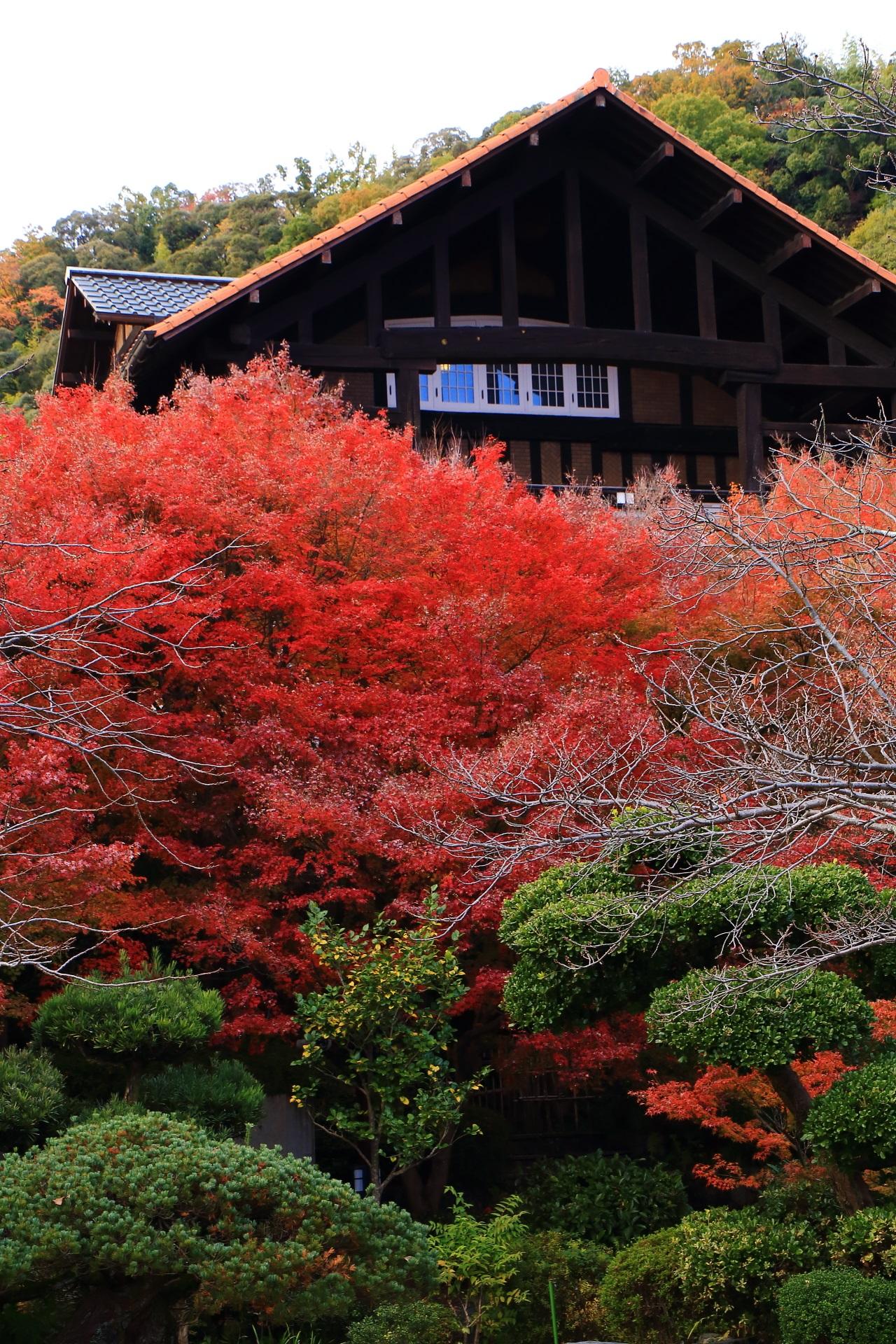 松や刈り込みの深い緑と真っ赤な紅葉の綺麗なコントラスト