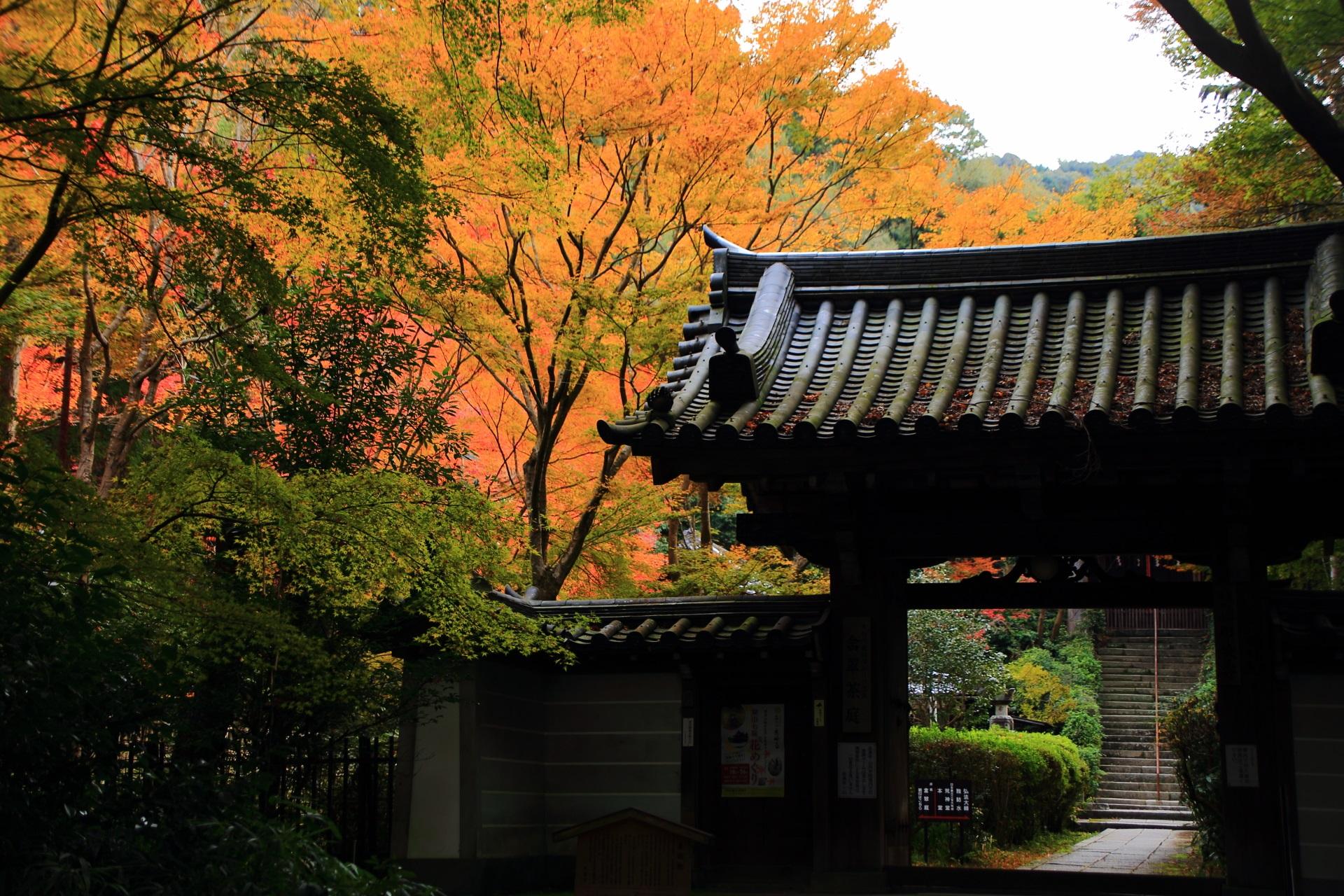 来迎院のより深い色合いの紅葉につつまれる山門