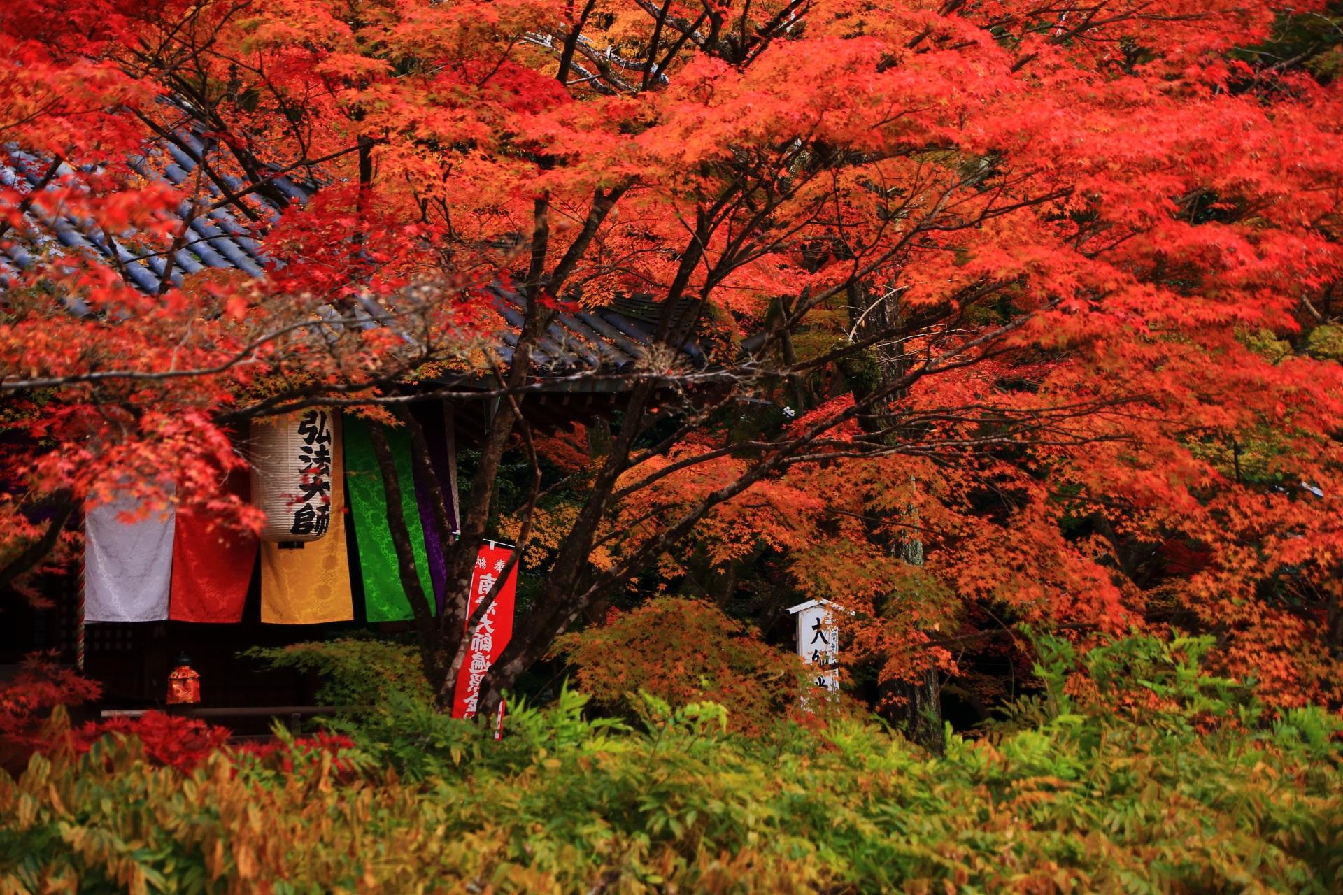 今熊野観音寺を開創された弘法大師の提燈と紅葉