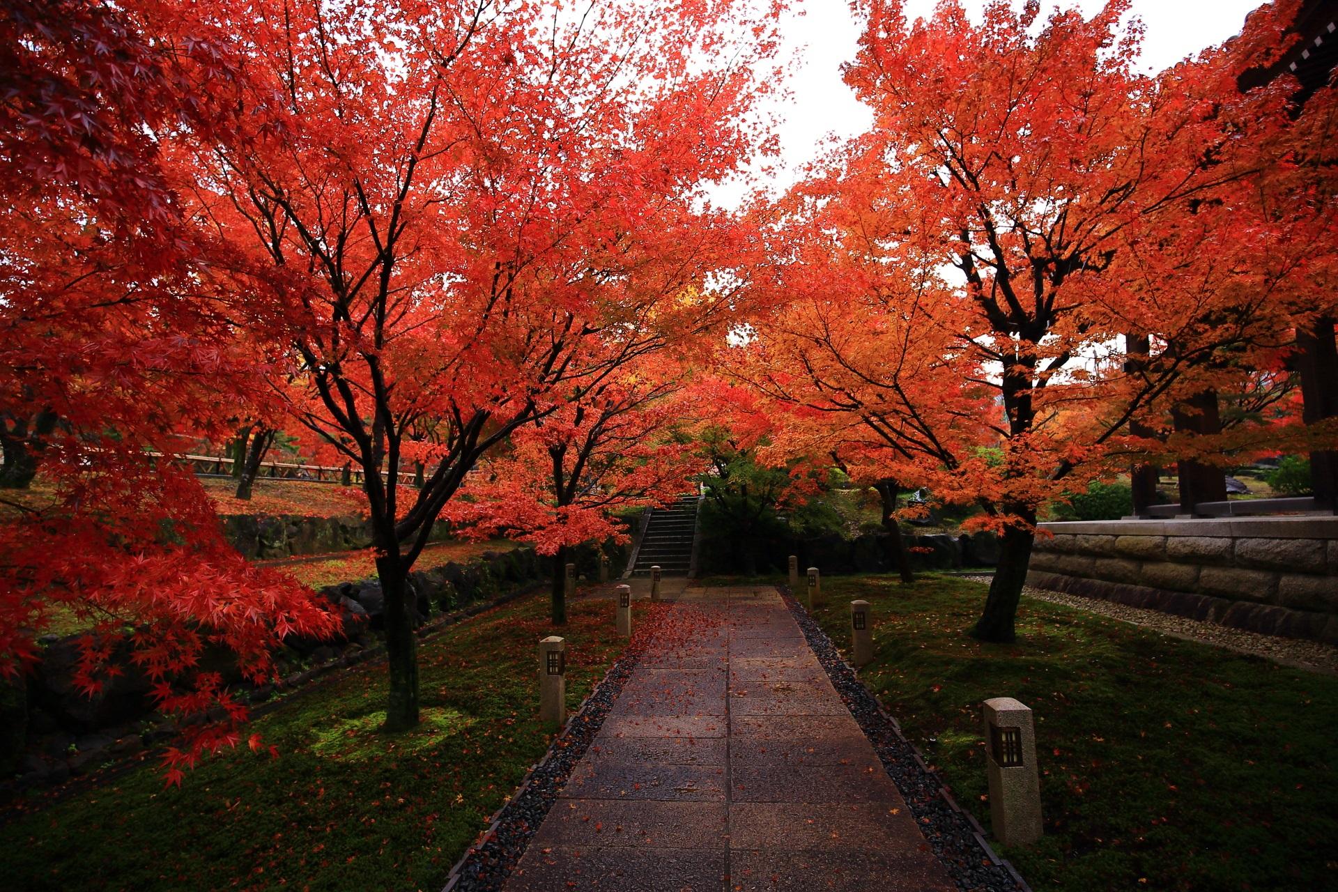 智積院の鐘楼横の息をのむ圧巻の紅葉の参道
