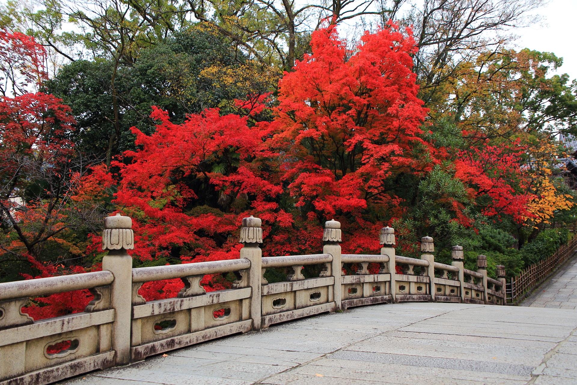 大谷本廟の円通橋と真っ赤な紅葉