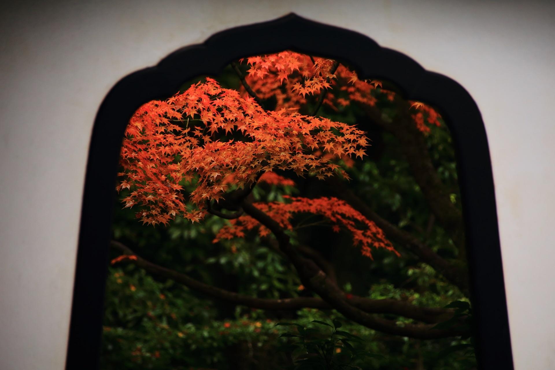 桂春院の「清浄の庭(しょうじょうのにわ)」から眺めた侘の庭の紅葉